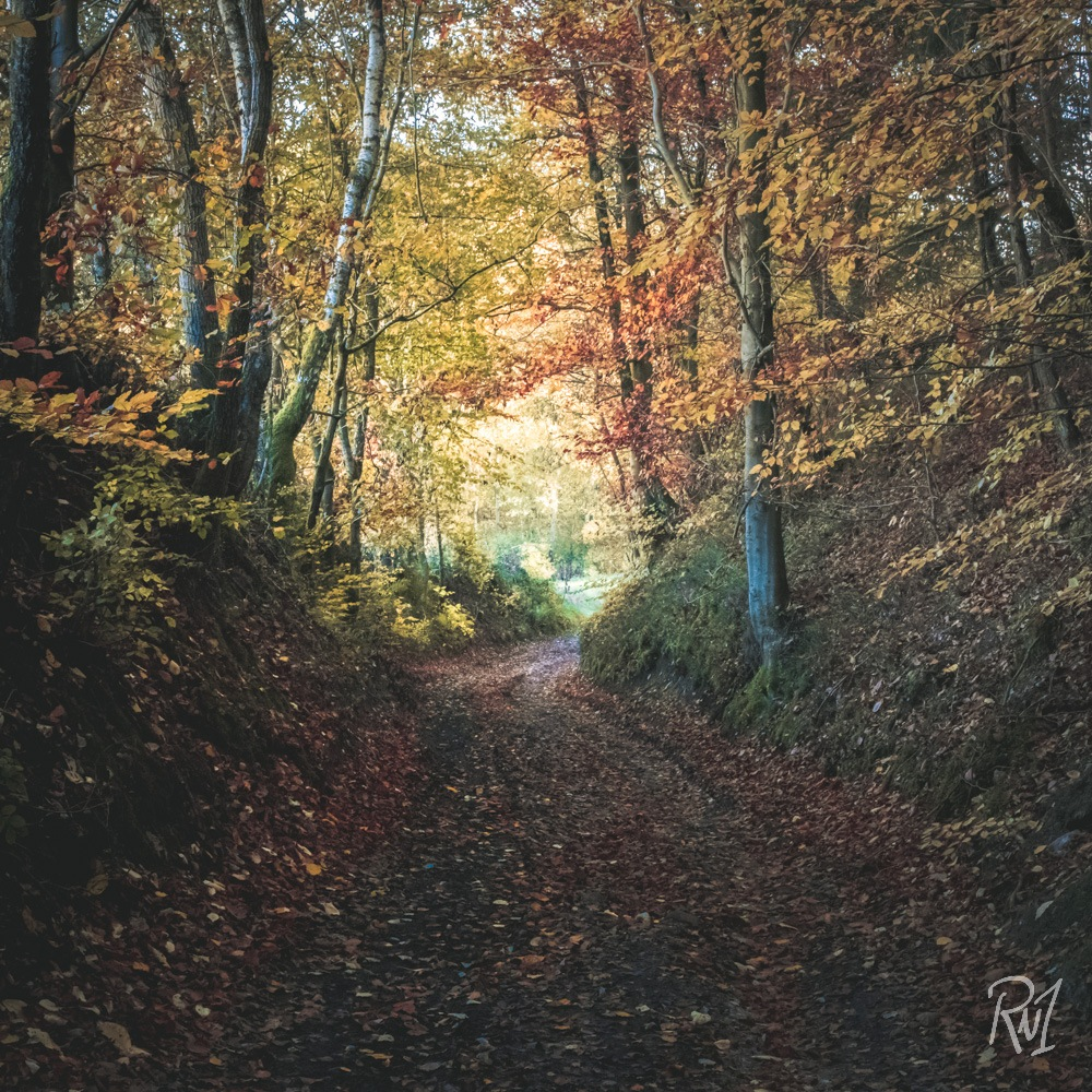 Digging Nature by Joni Hesse