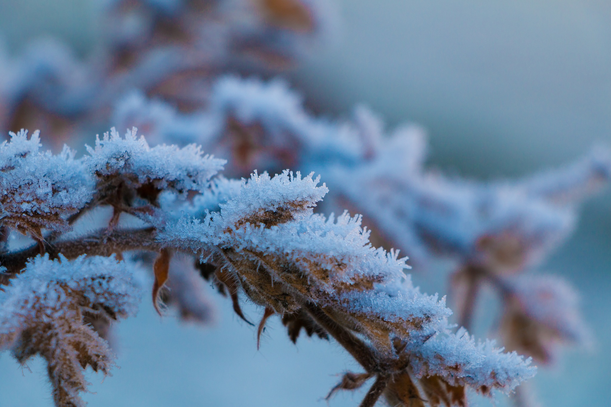 Frozen Plant by André Eyer