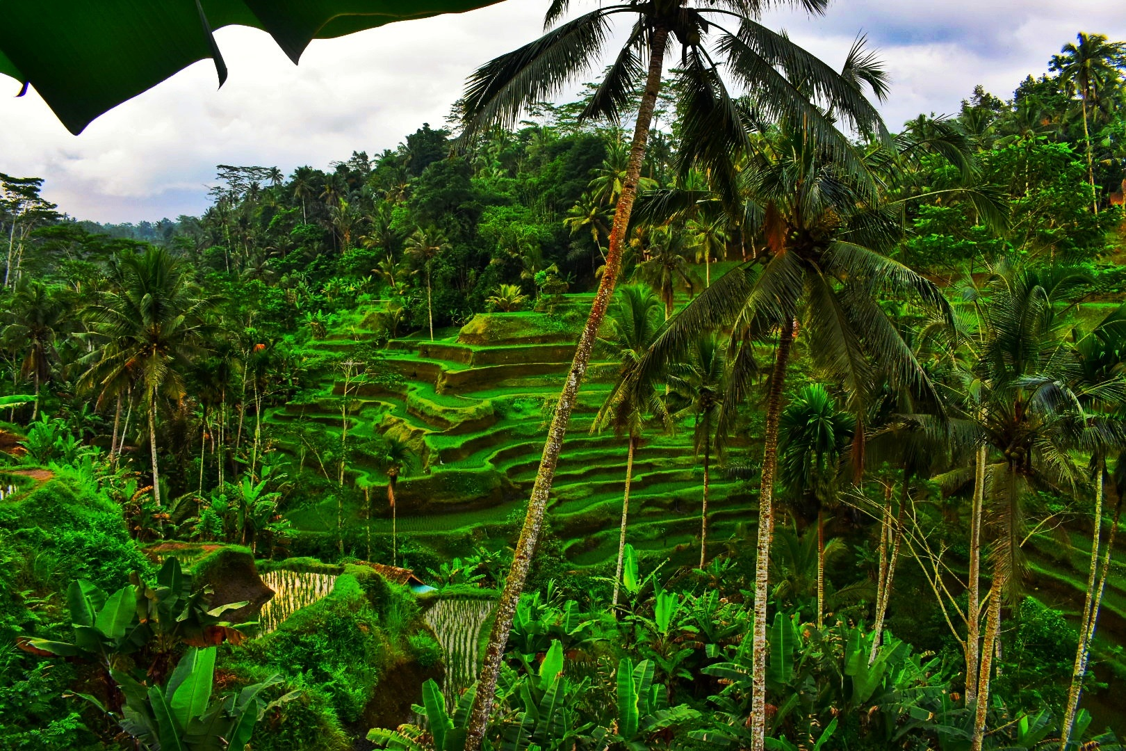 Green of bali by Leslie Addy