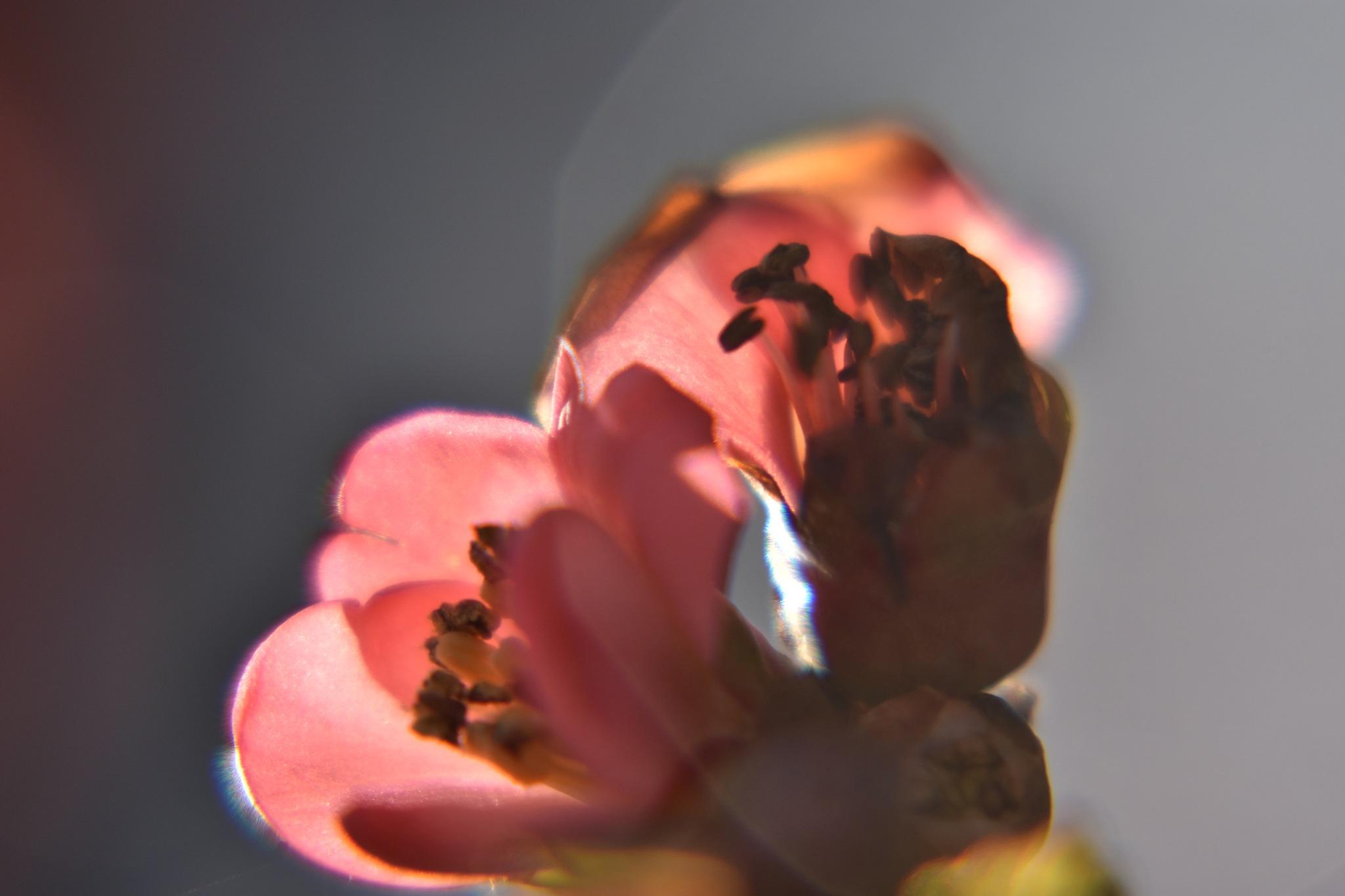 Flower by julie