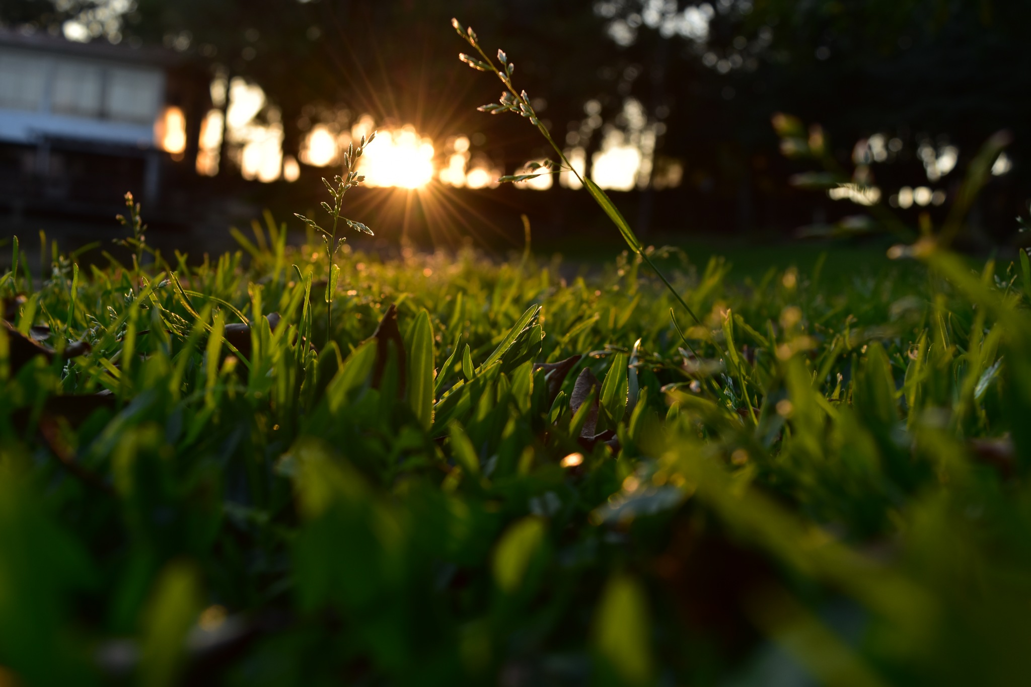 Grass + sunset by Fernanda Lenhard