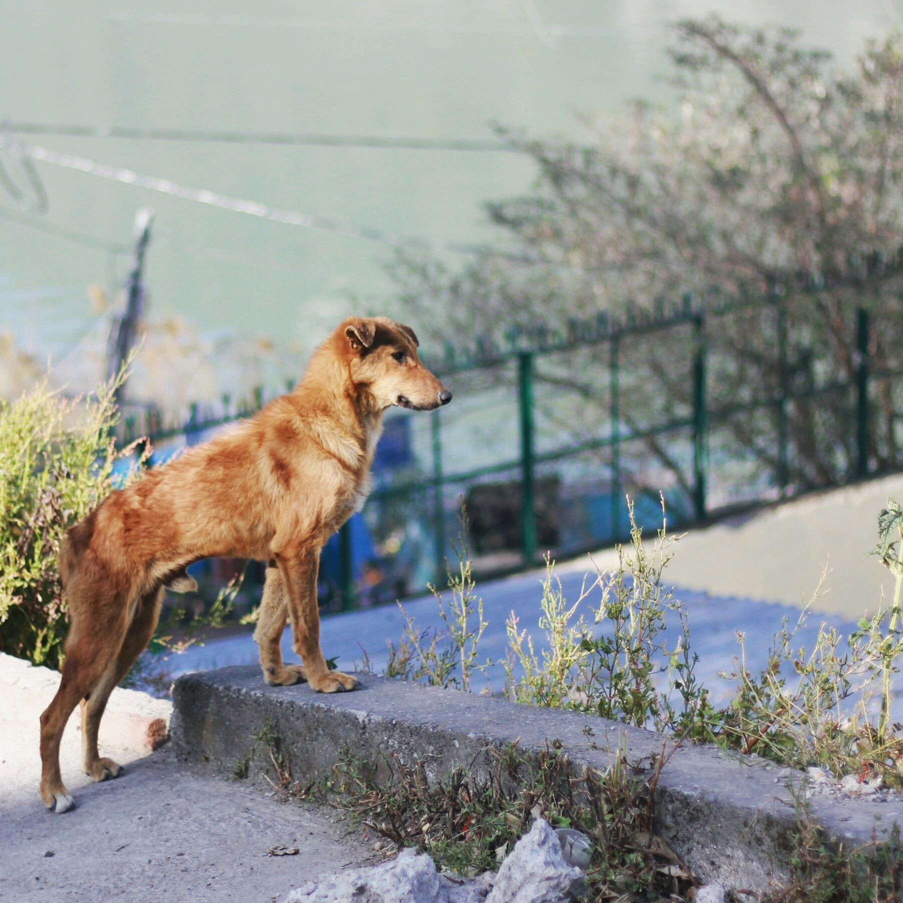 A Dog with a Sight  by Aditya Sonsurkar