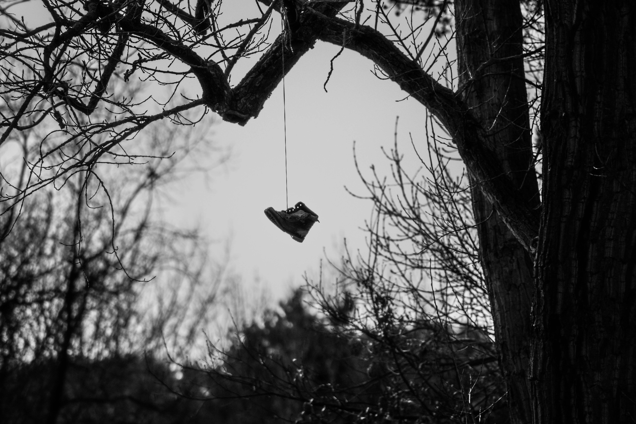 Schuh im Baum by Nico Karl Döhne