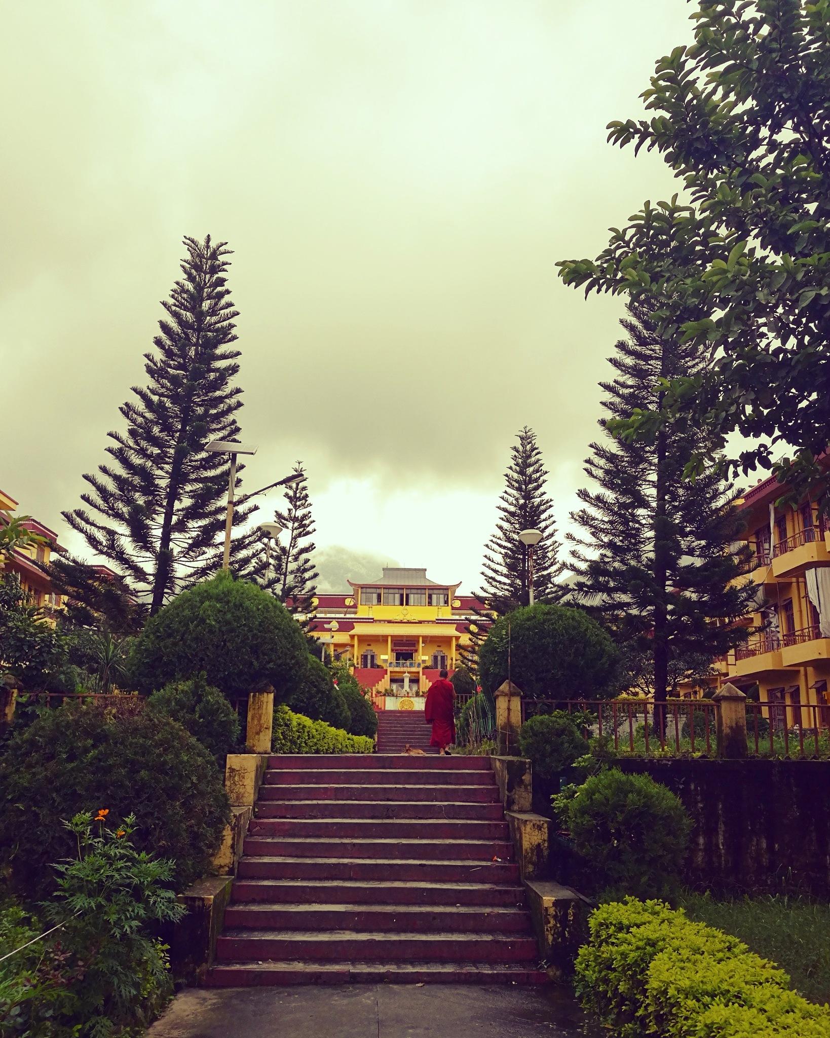 Peace by Shubhanjali Bisht