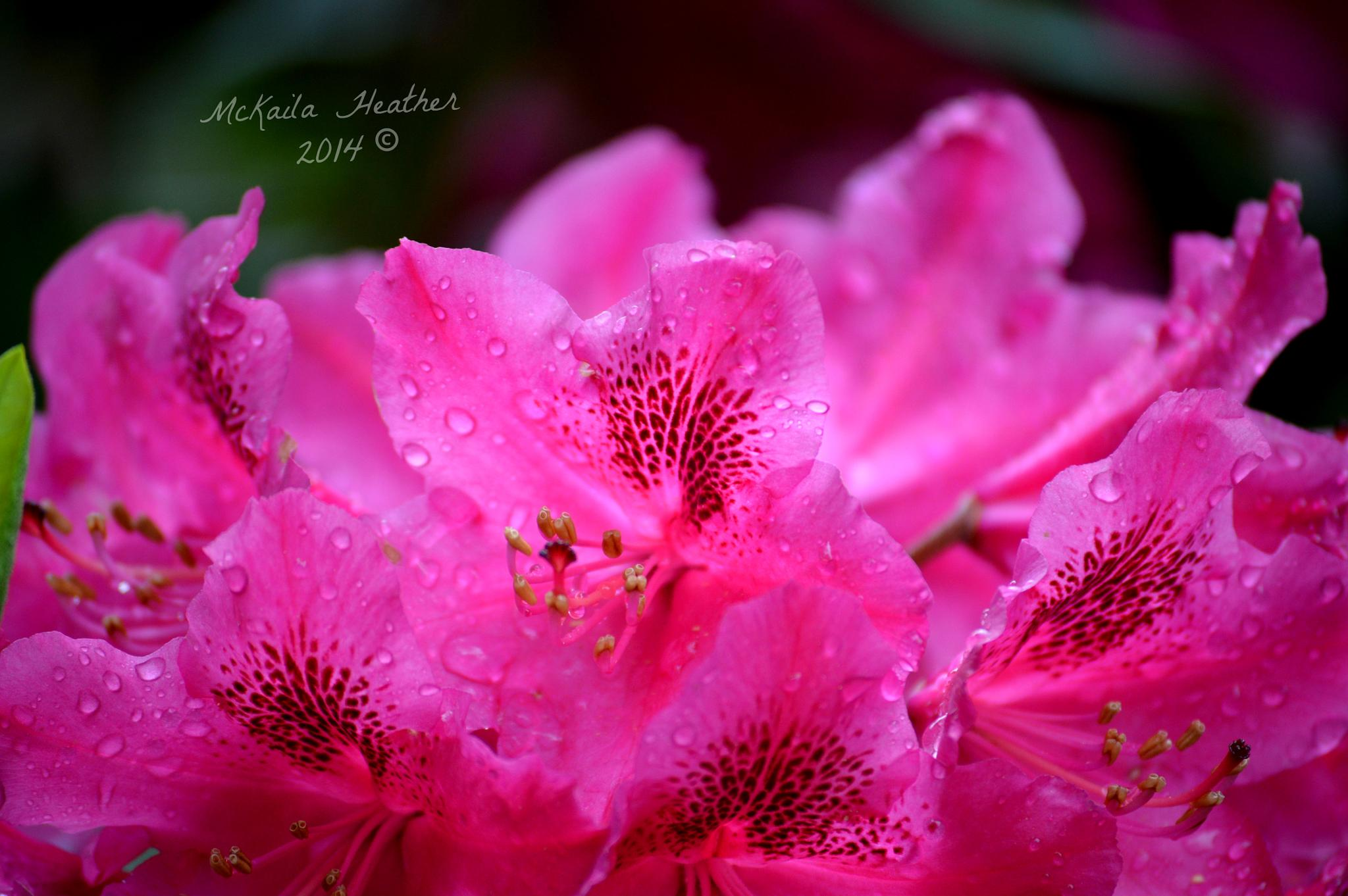 Wet Flowers by McKailaHeather