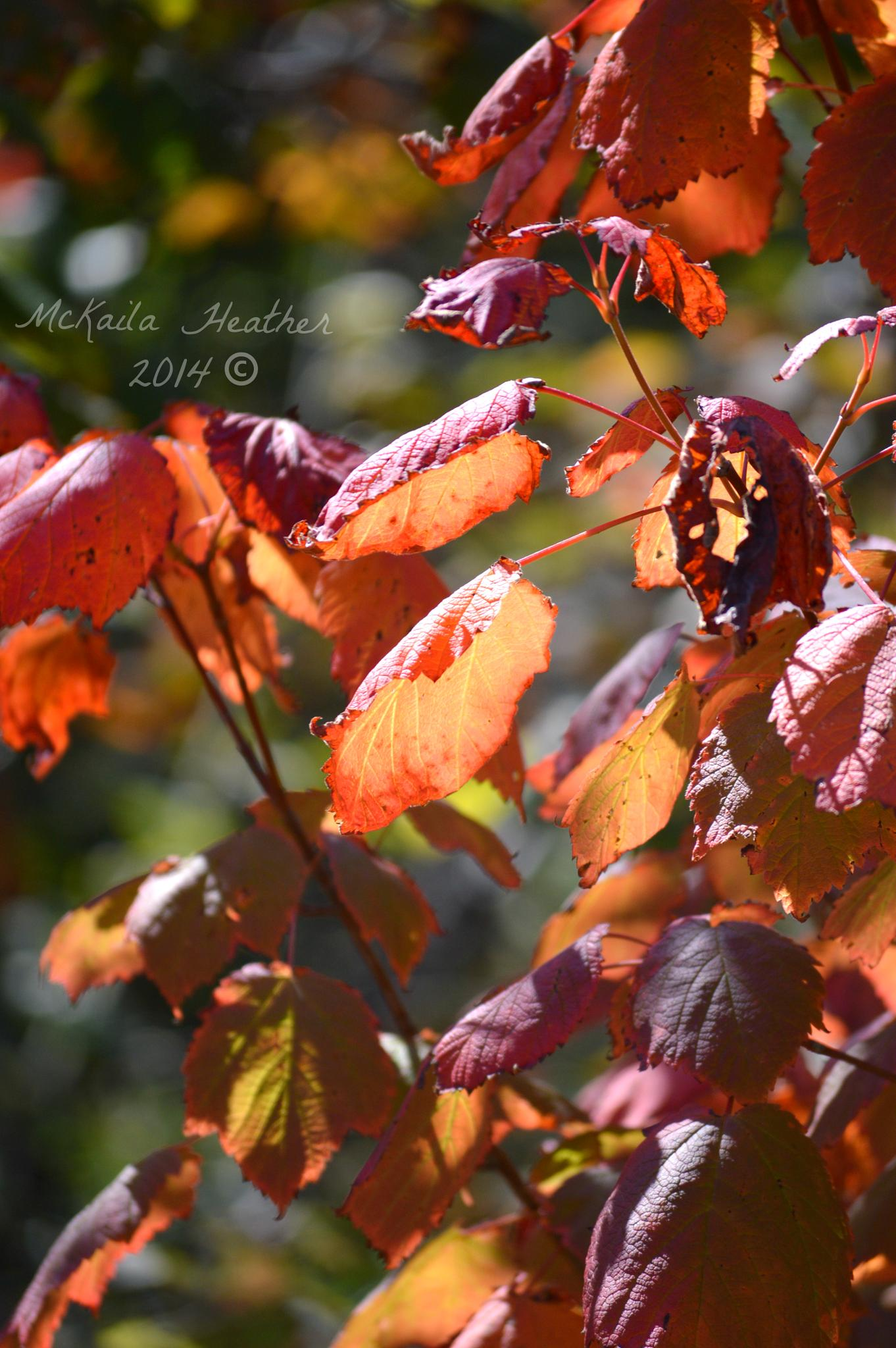 Fall Lights by McKailaHeather