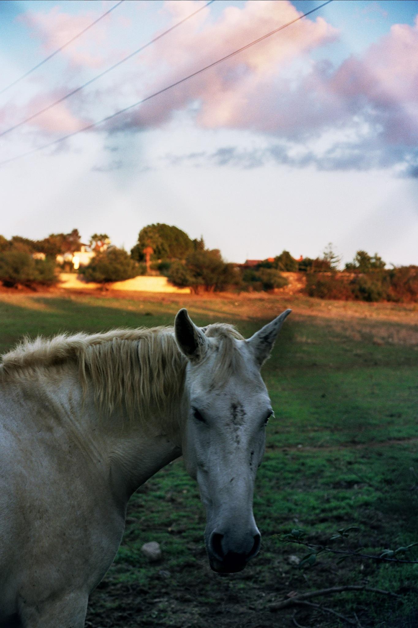Horse by Jorge Eduardo Gordillo Santos