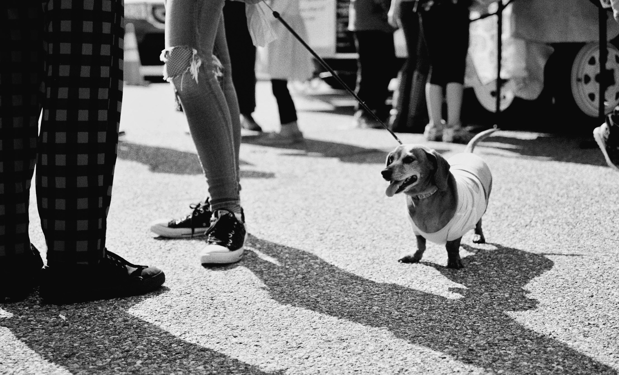 Dog in a crowd by Luis Lopez