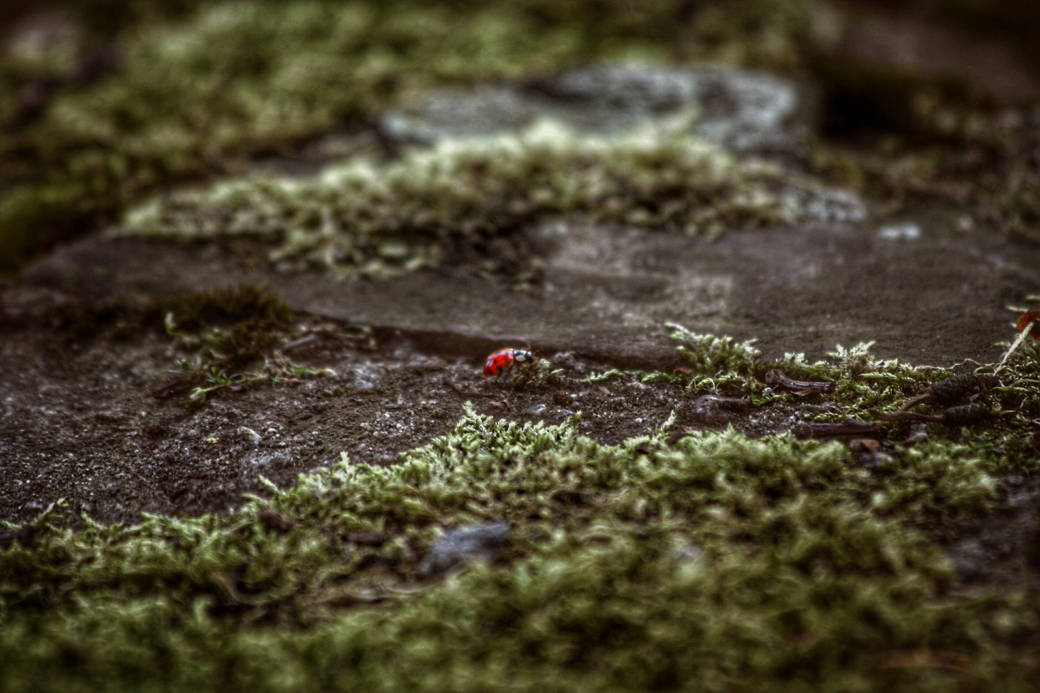 Ladybug by Frederic Basse