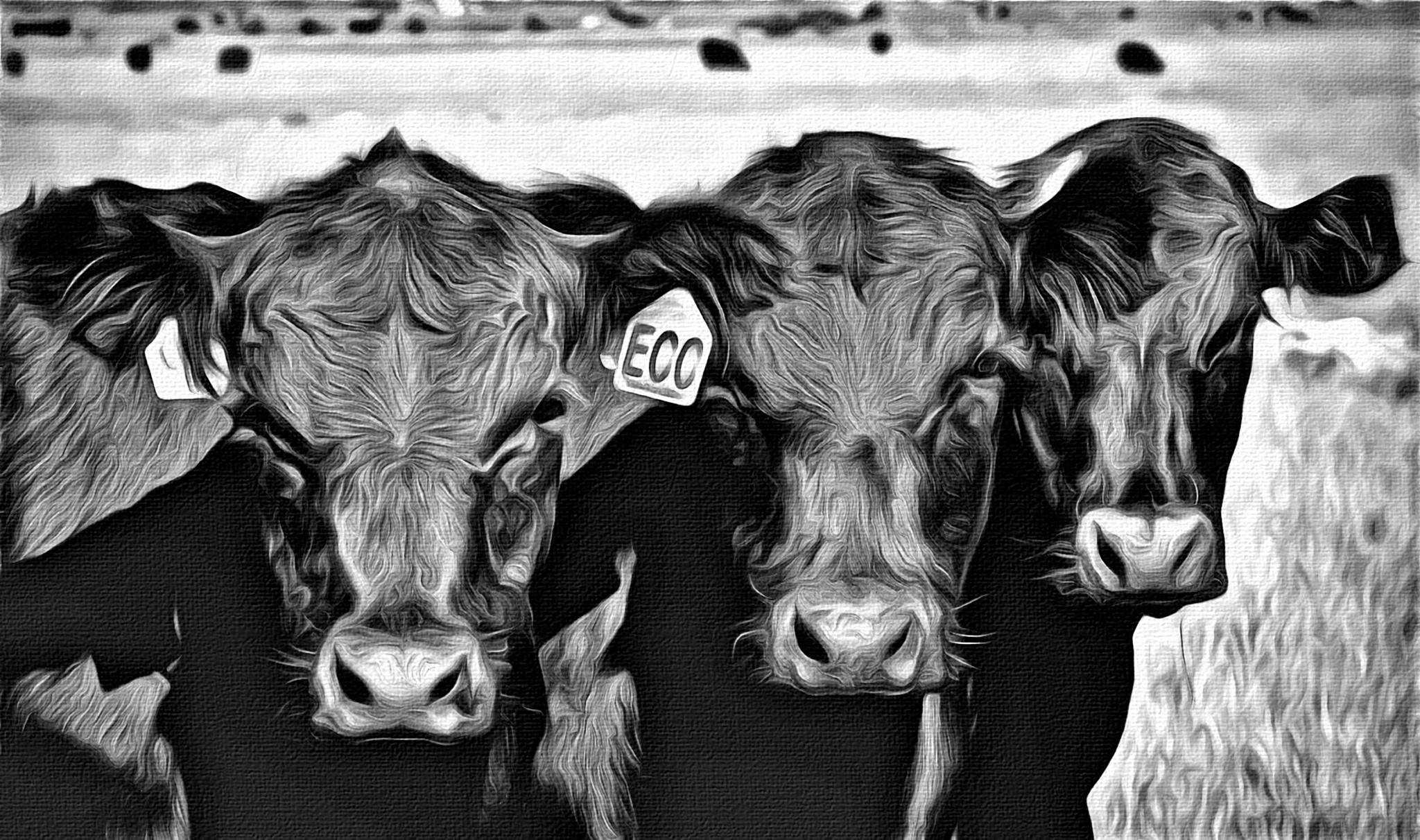 Three amigos... by barbaradudleyphotography