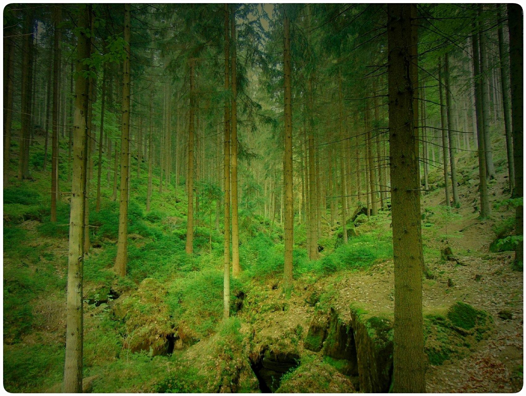 Wood I by Jolanta Placek