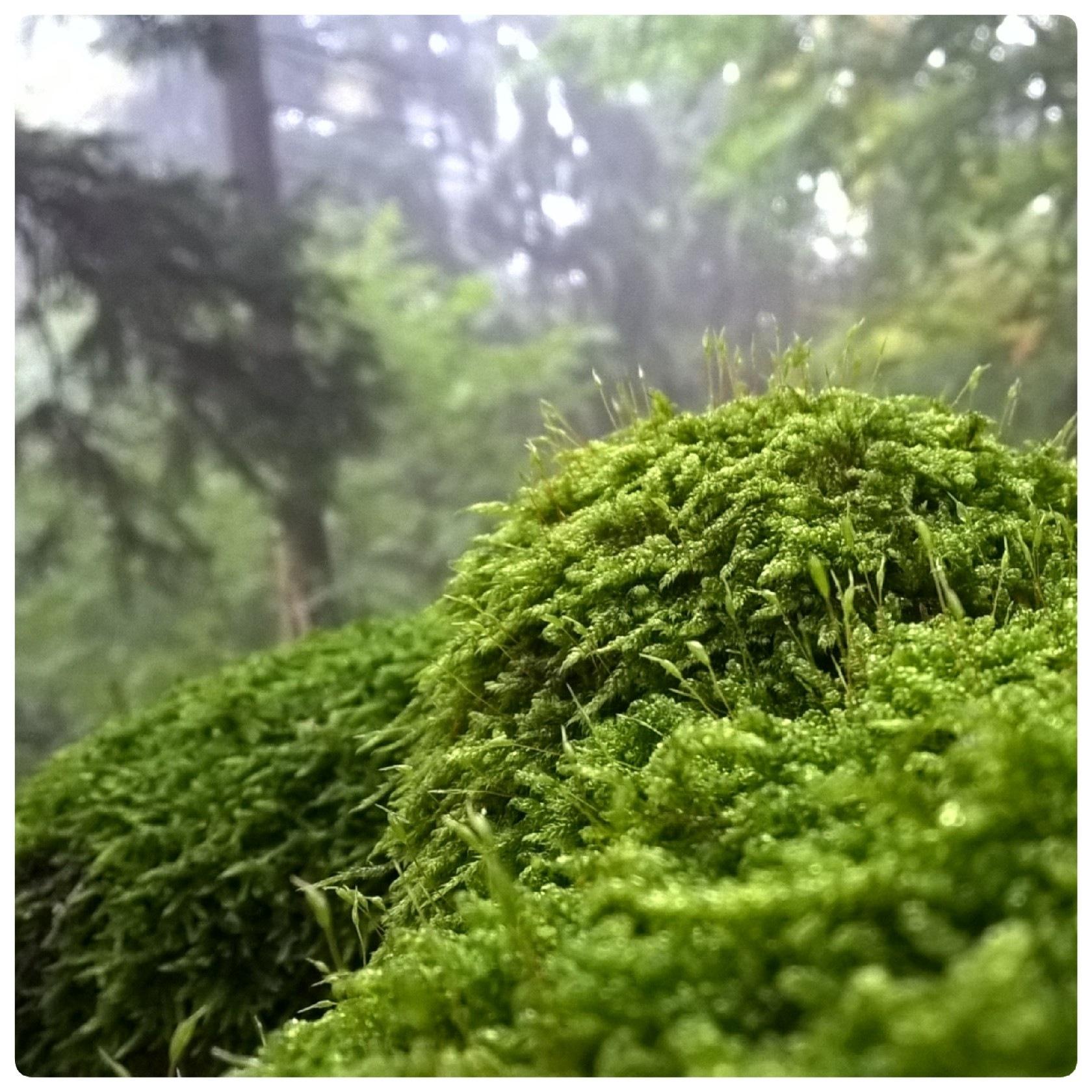 Green by Jolanta Placek