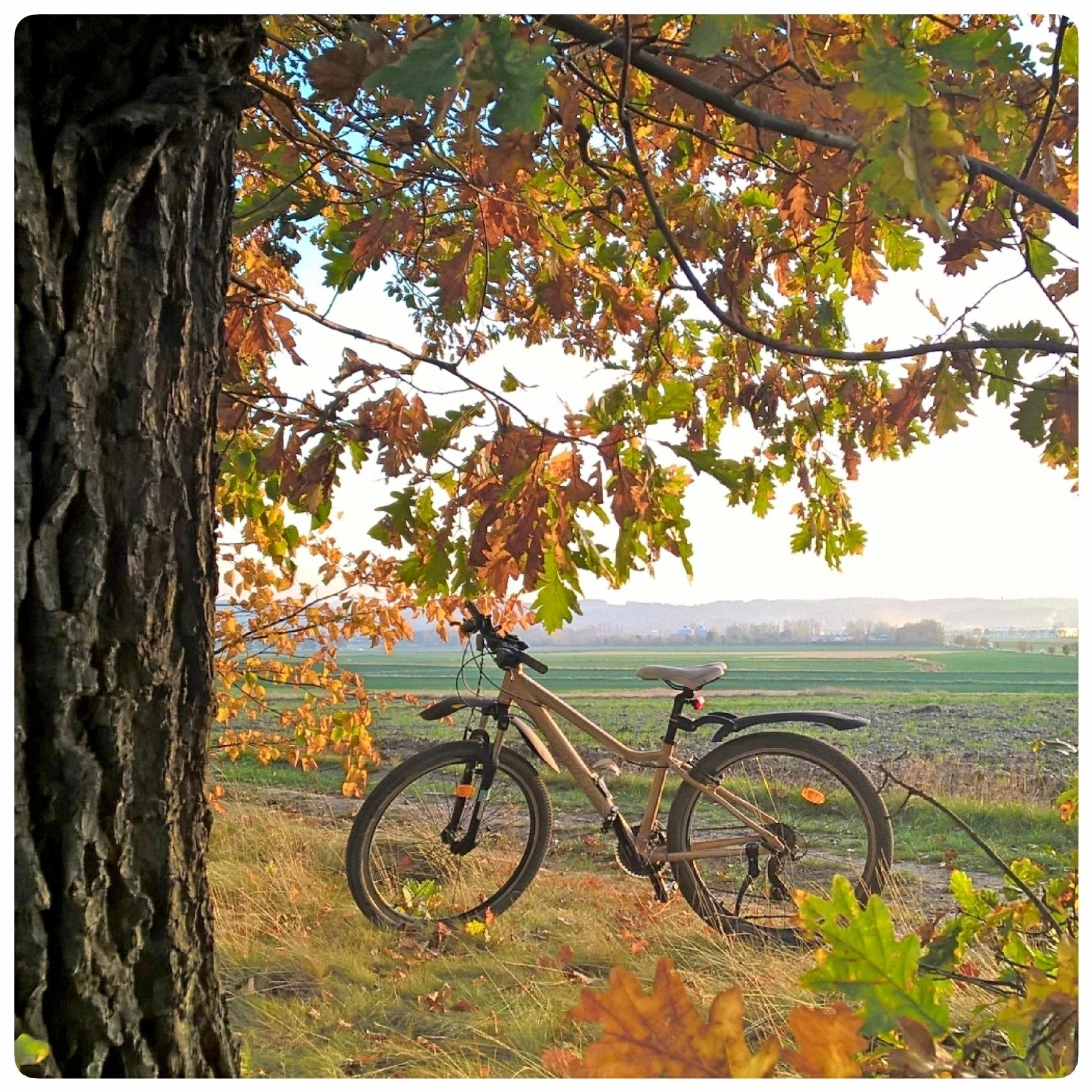 Autumn by Jolanta Placek