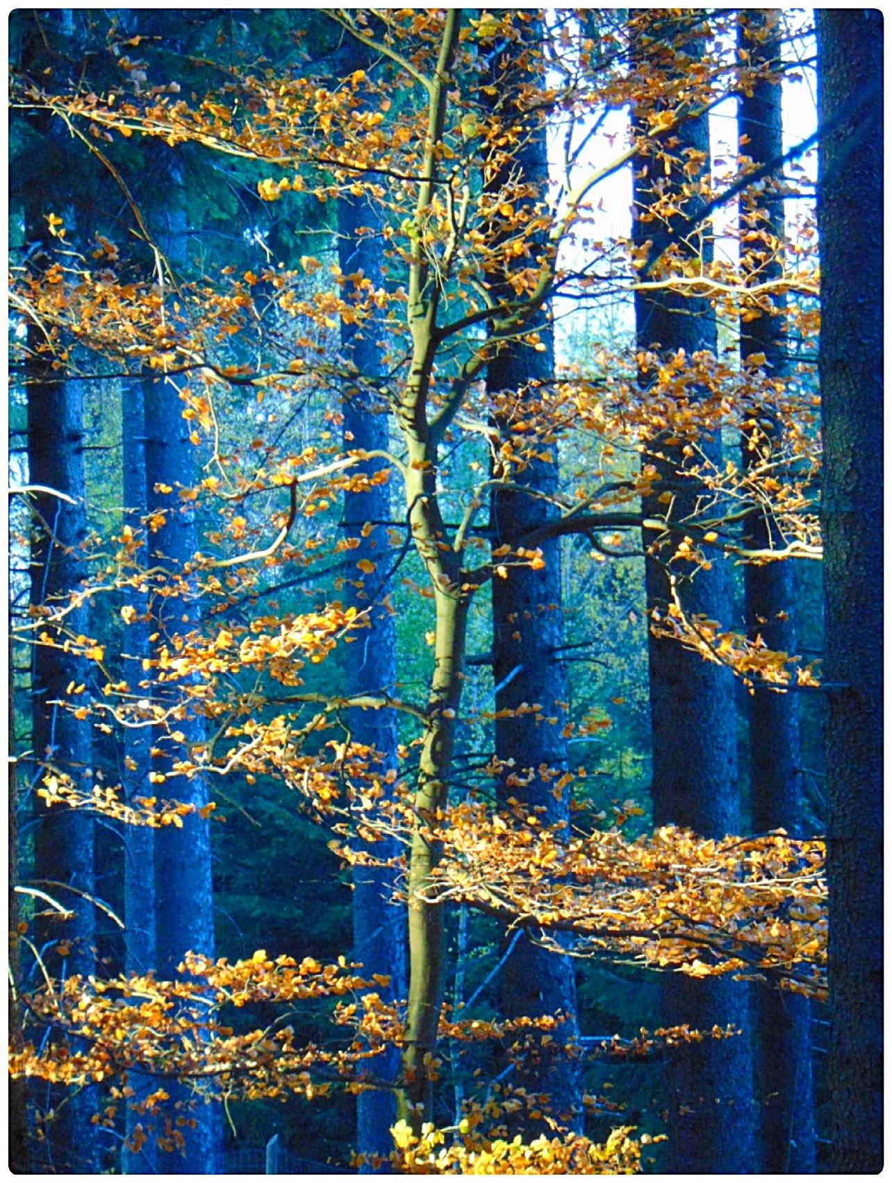 In gold by Jolanta Placek