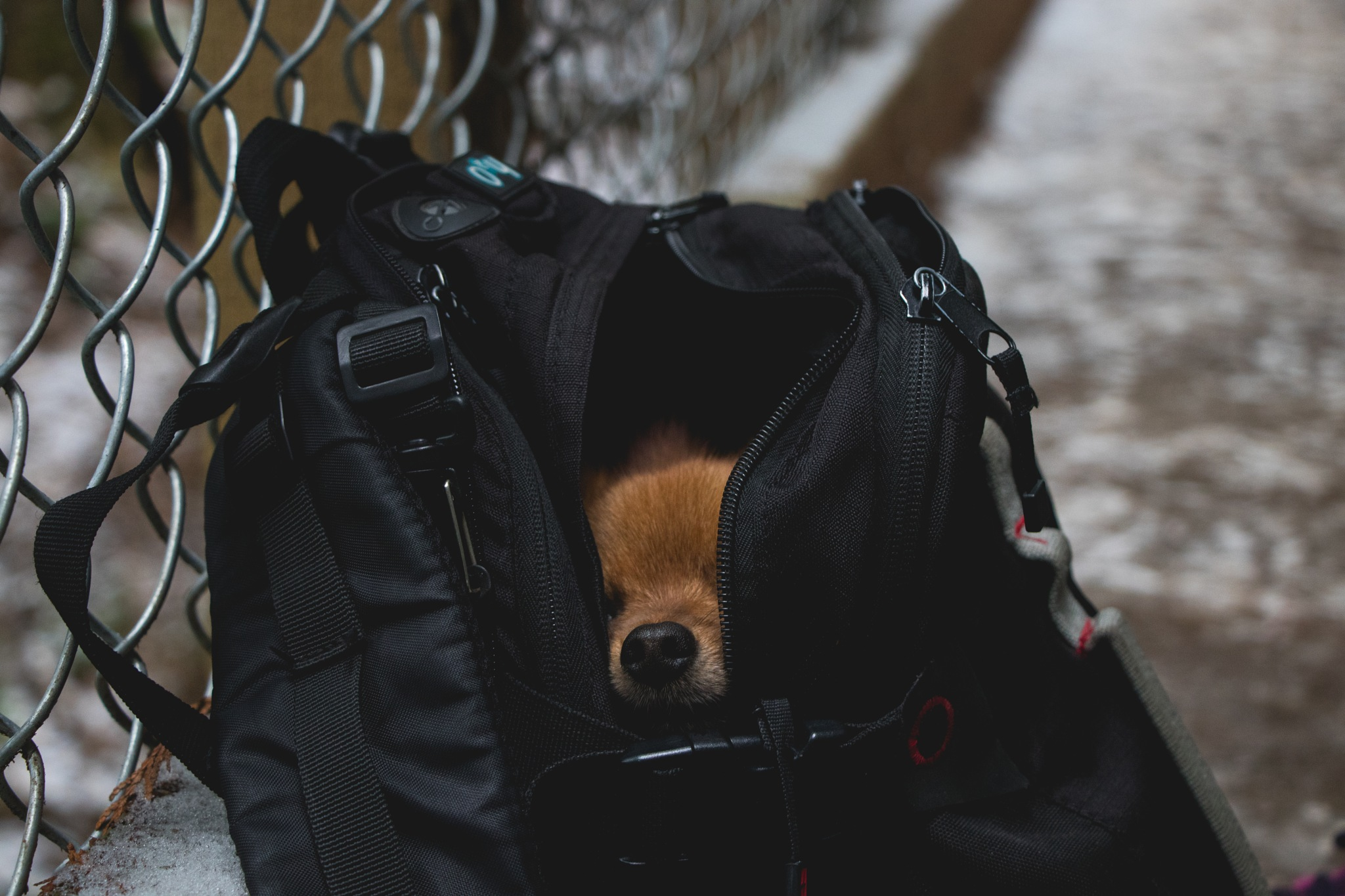 Dog In A Bag by Nathan Smith