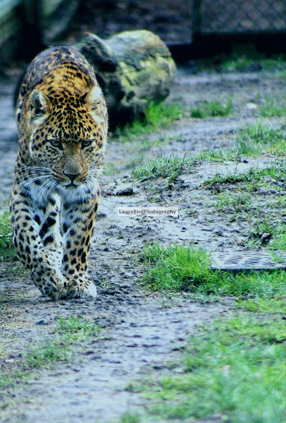 On the Prowl by Laura Bird