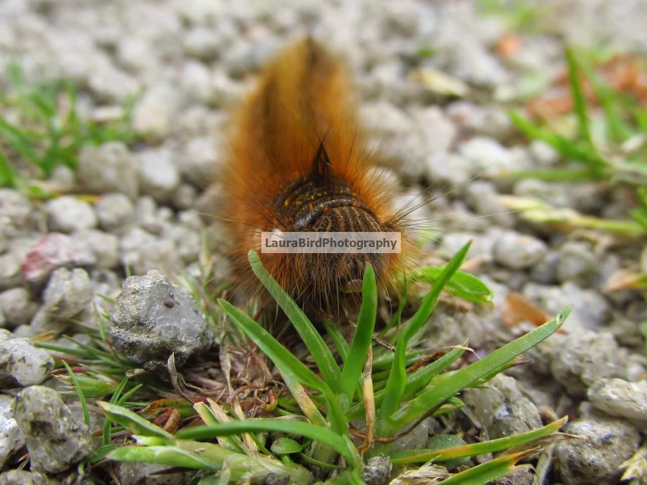 Caterpillar Close Up by Laura Bird