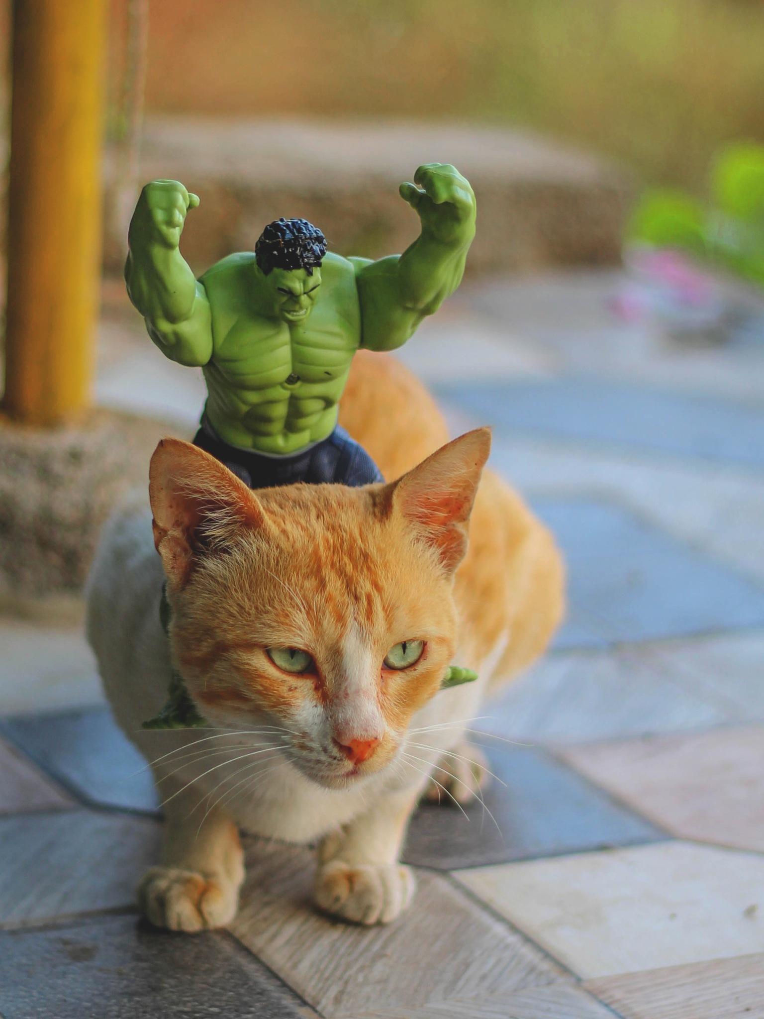Hulk Vs Mijbil  by Kuldeep Kudnekar