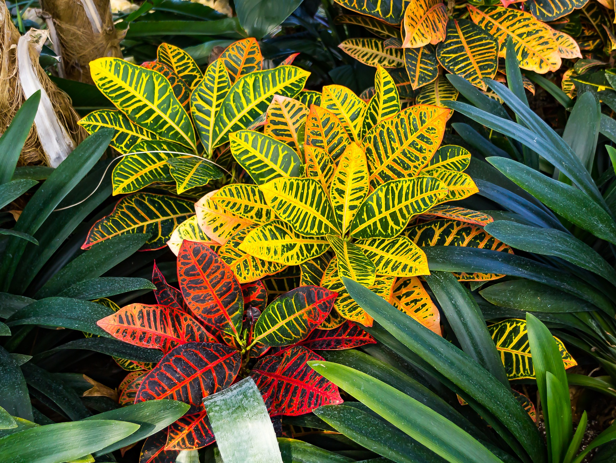 Colourful Plants by Steve Struthers