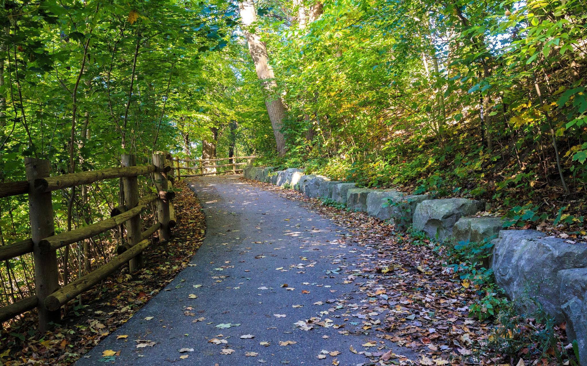 Pathway by Steve Struthers