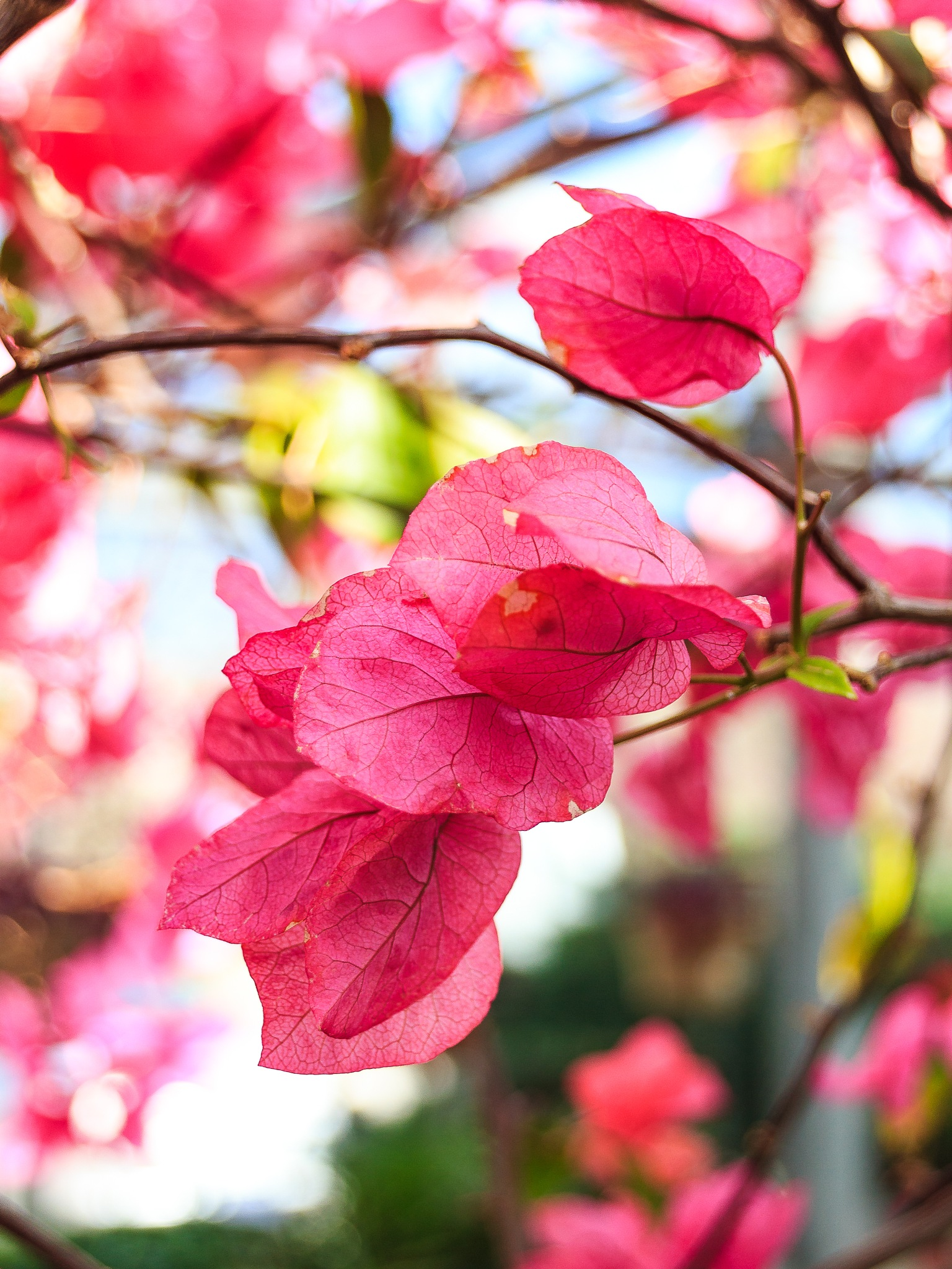 Pink Leaves by Steve Struthers
