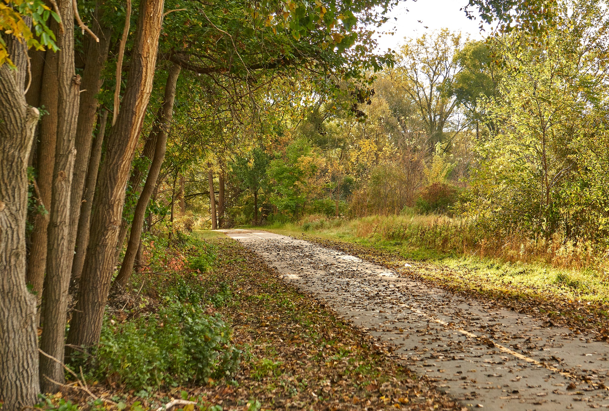 Autumn Path by Steve Struthers