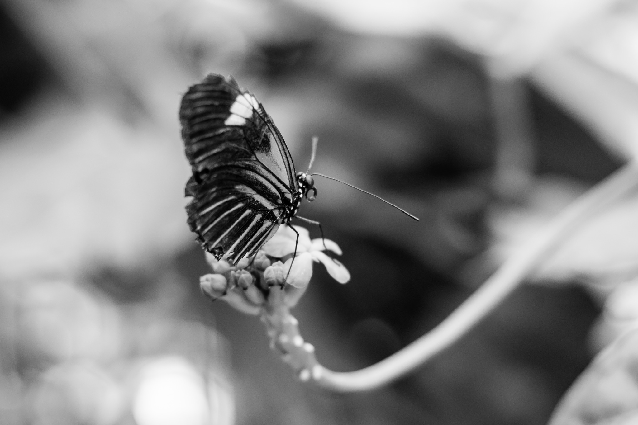 Butterfly by Patrick's Photo
