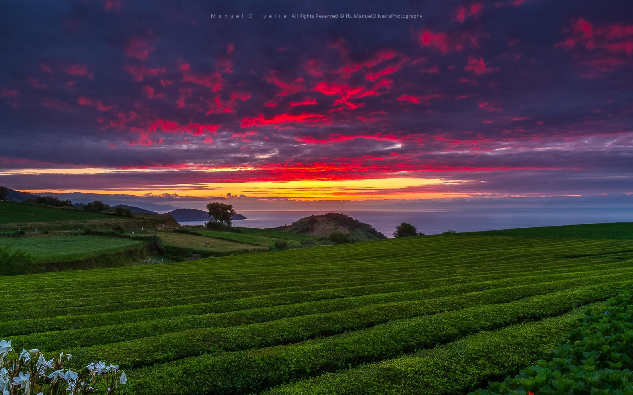Photo in Landscape #landscape #azores #canon #sunset #magic