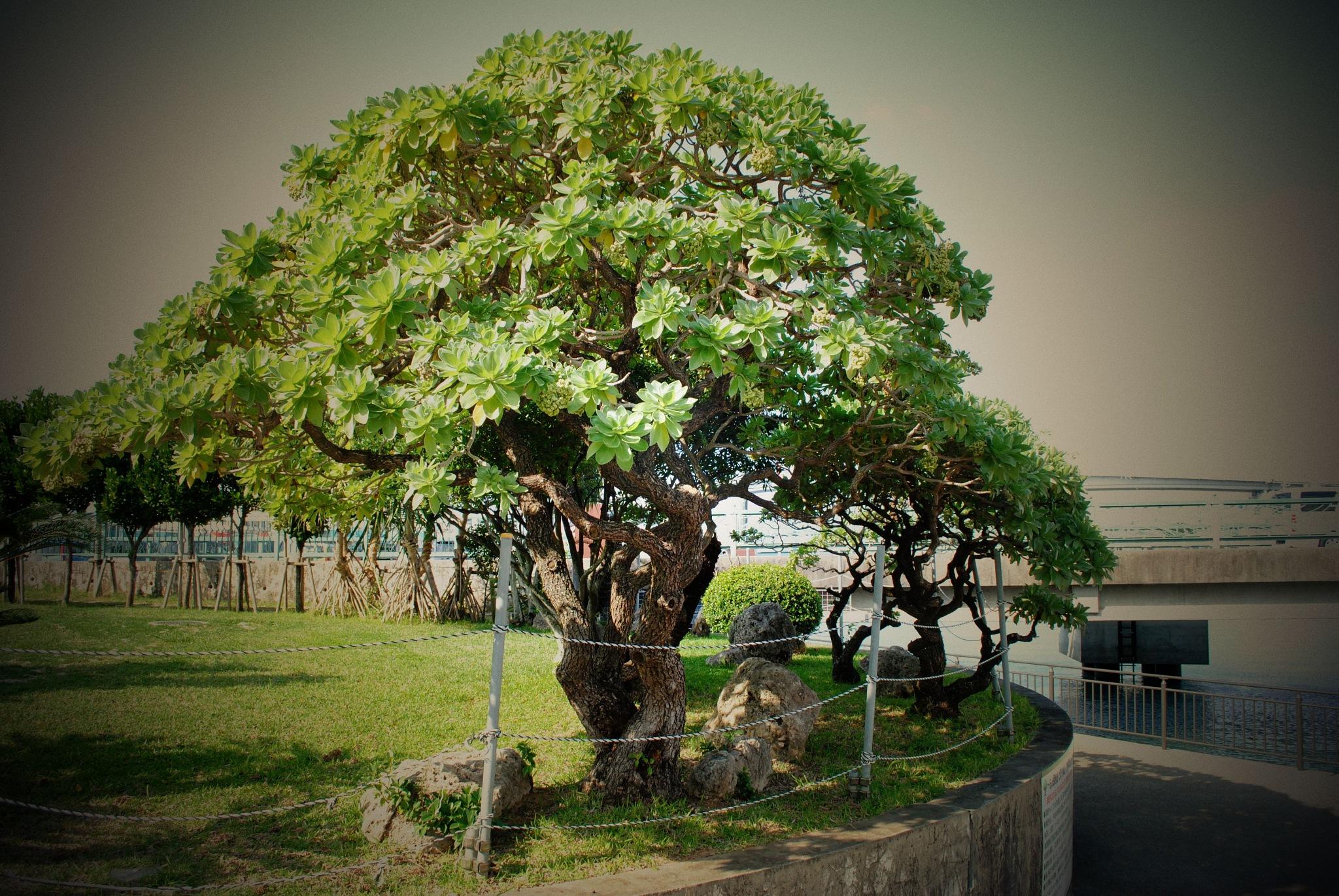 park tree by hugaman157