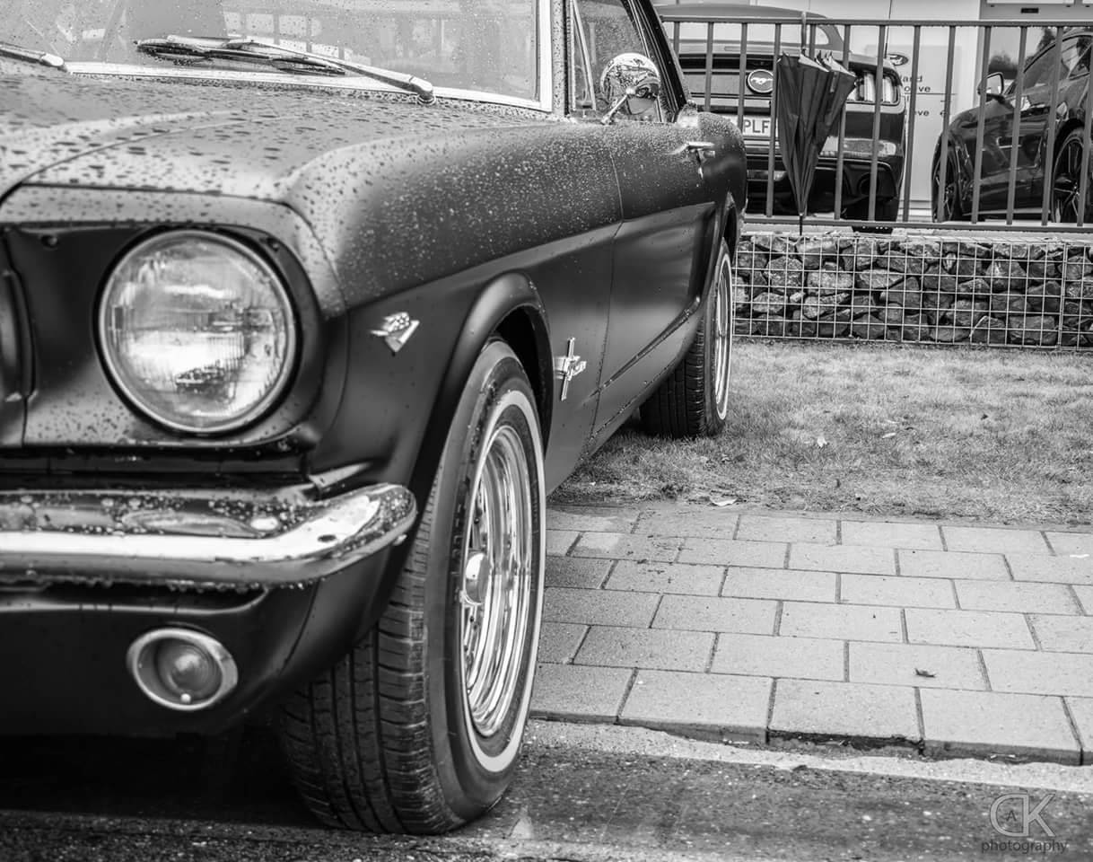 ustang  by DE KERF ANTHONY