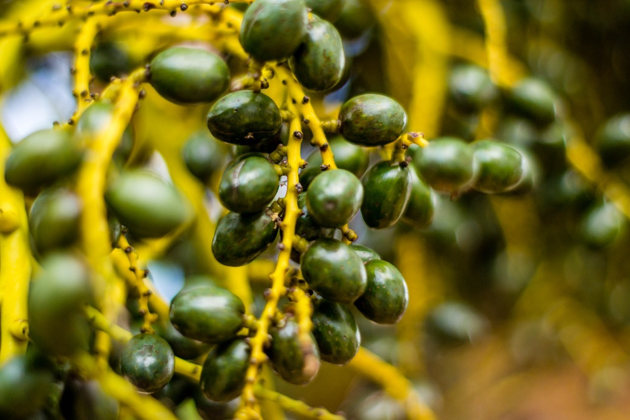 Seeds  by asfotosdodayvisu