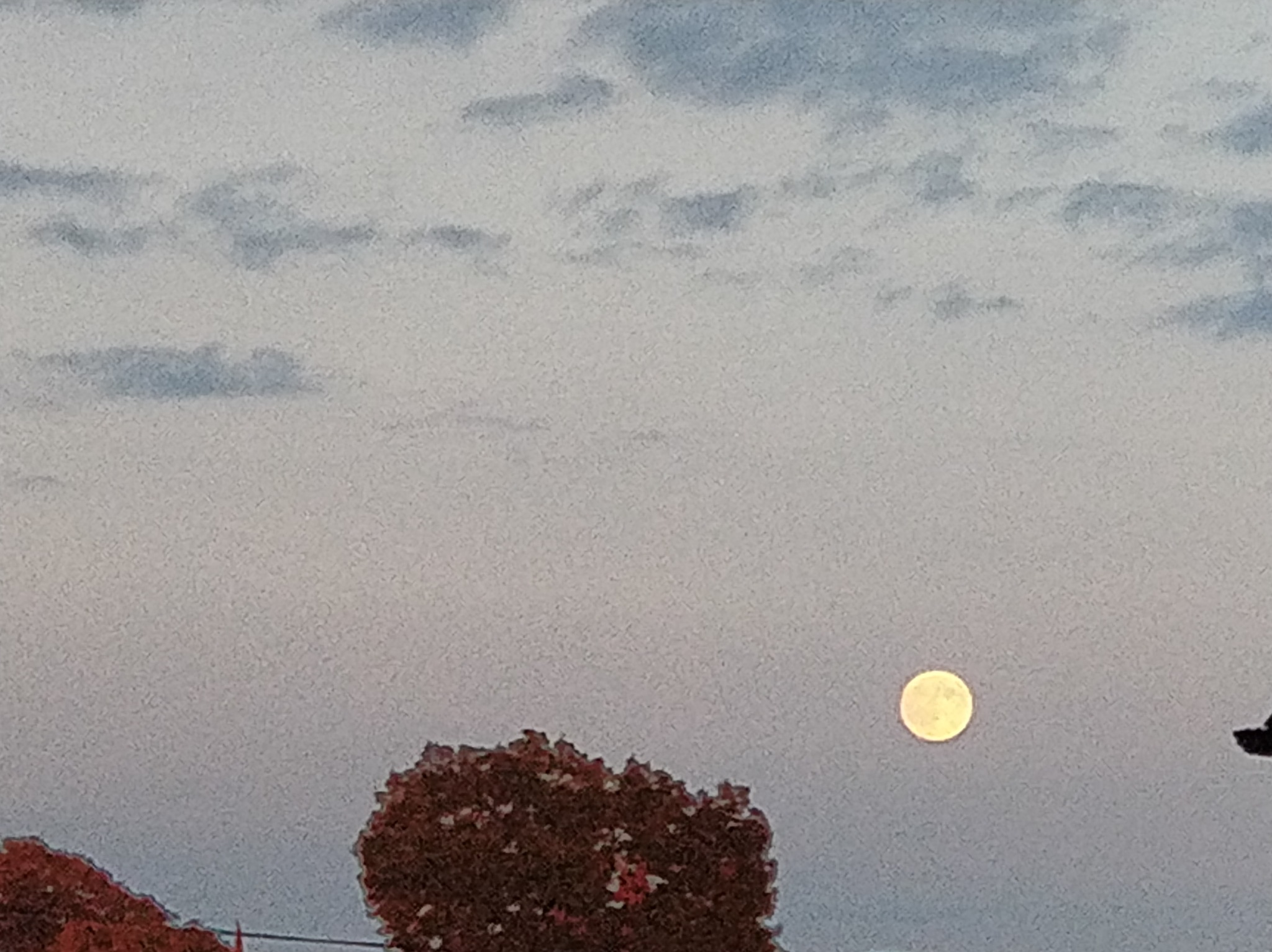 Full Moon by Noel Connolly