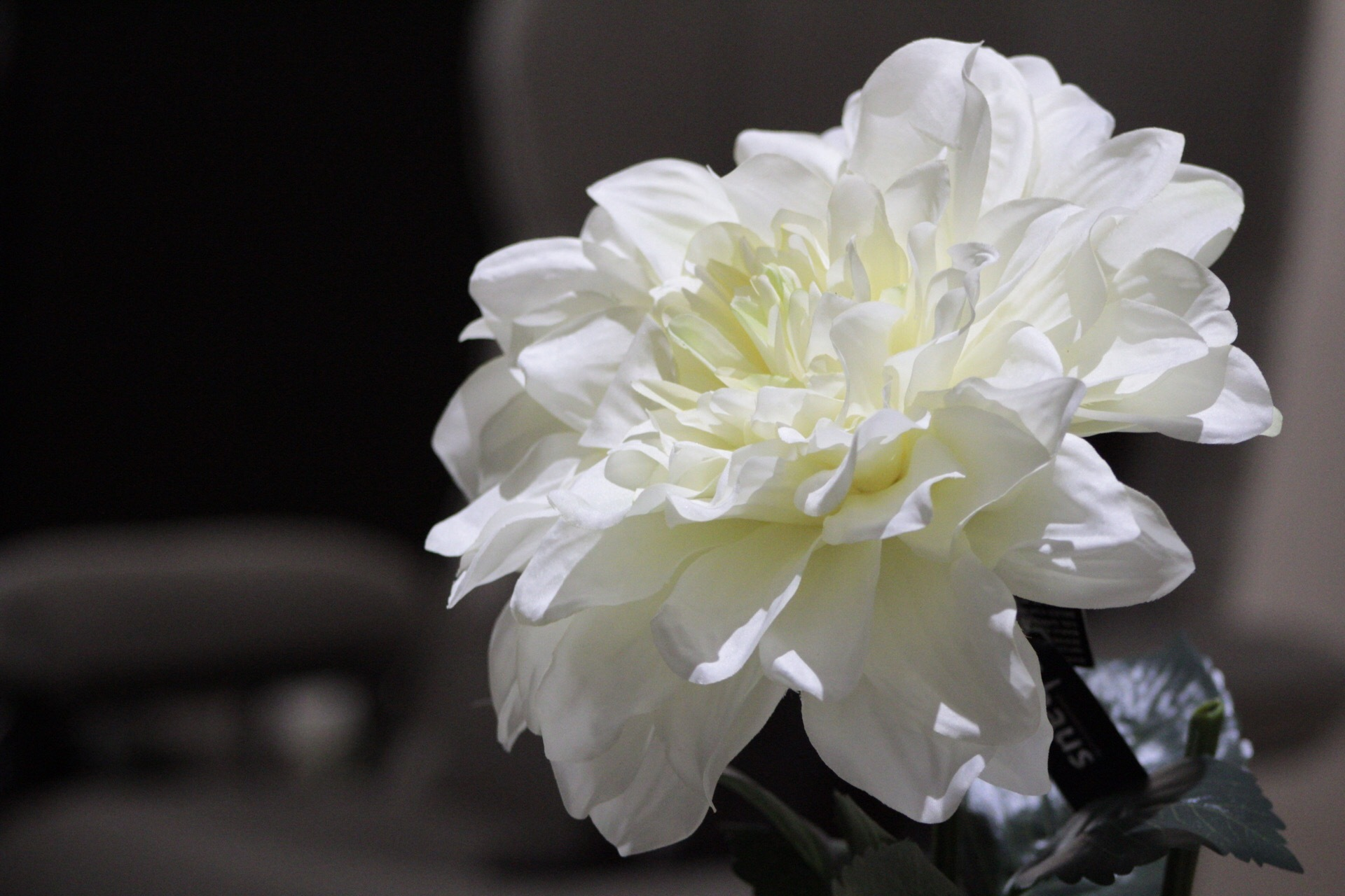 White flower by Josagraphy