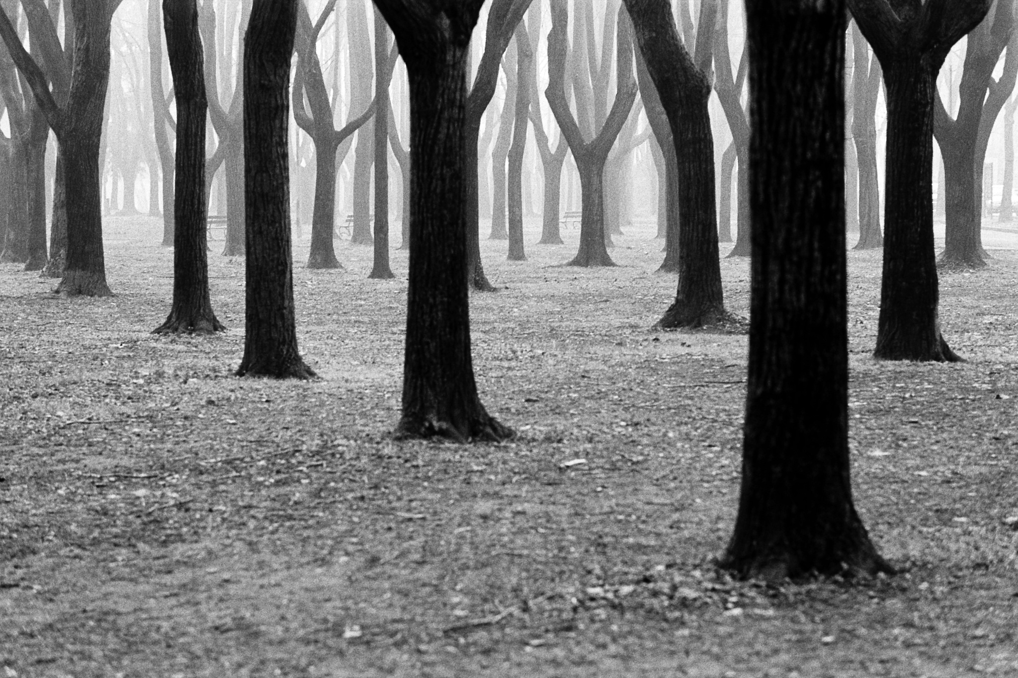 Foggy trees by Paolo Alberton