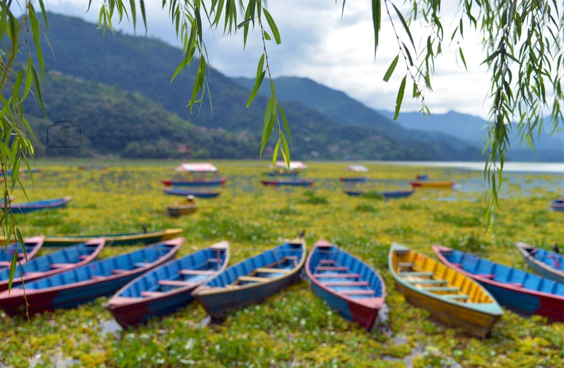 Boats by Tayju Sayami