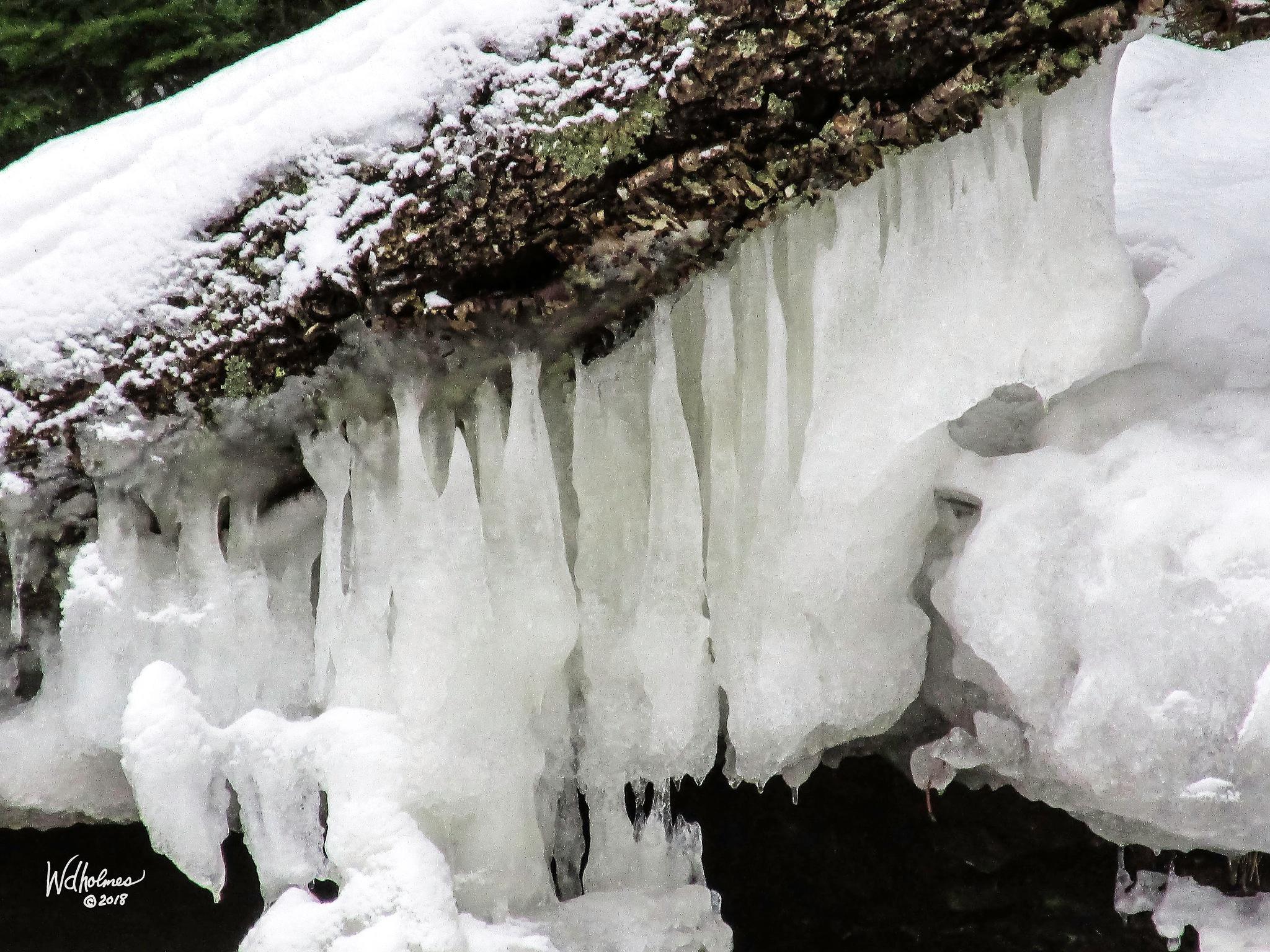 Ice on a Limb by wdholmes54z