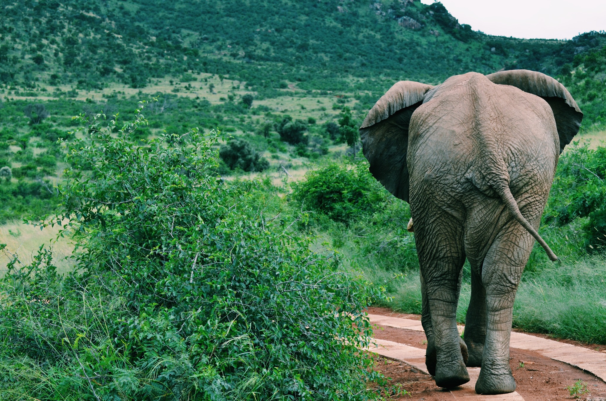 Traveling to South Africa by Alexia Constantin