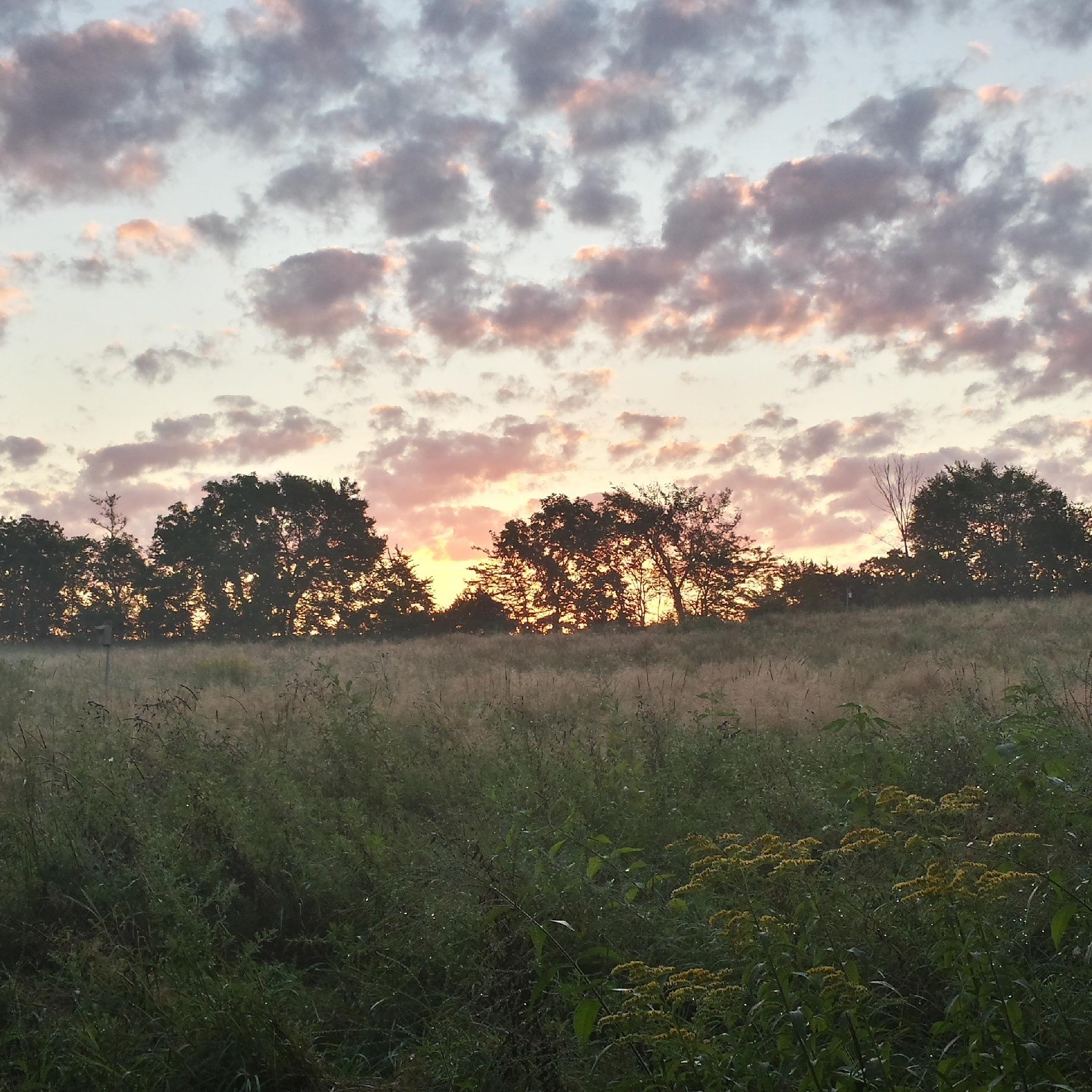 Summer sunrise by patgmcgovern