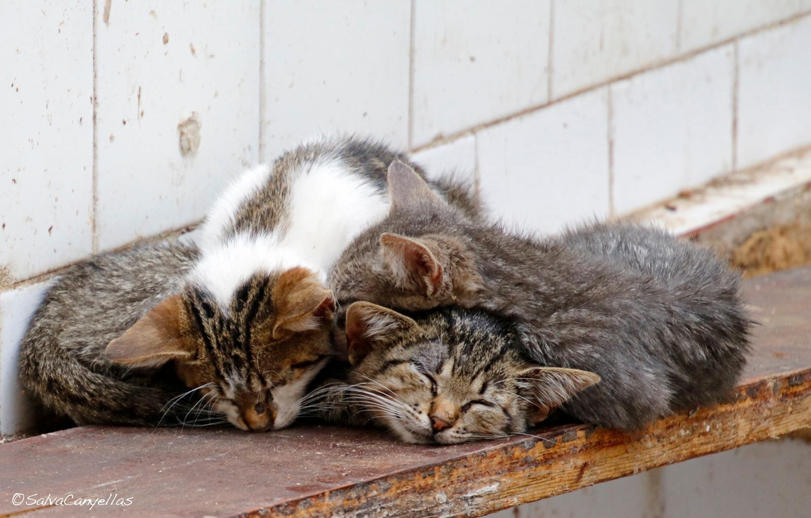 Photo in Animal #cat #cats #felis catus