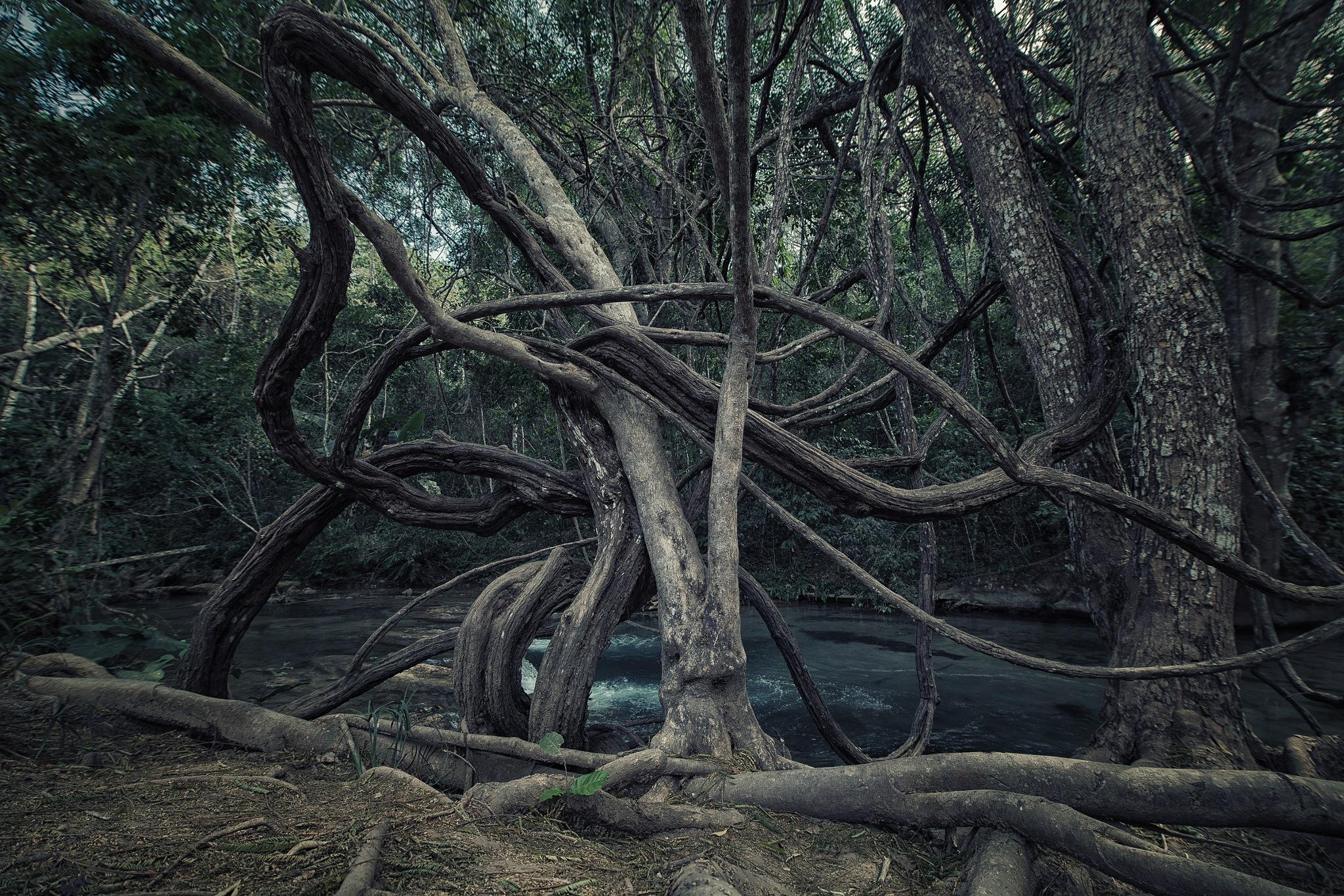 Twisted by César Ramos
