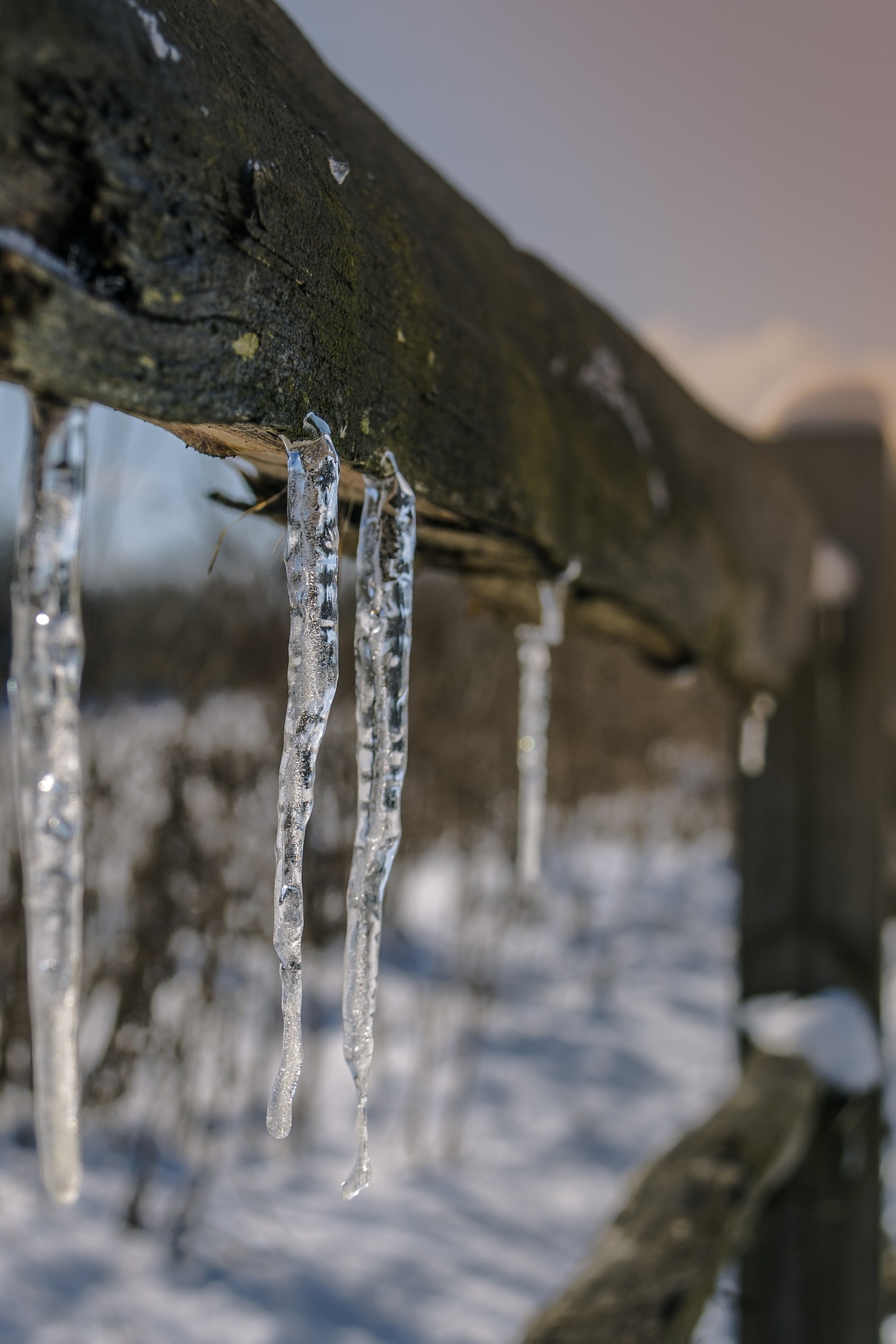 Icicle by Stu Robertson