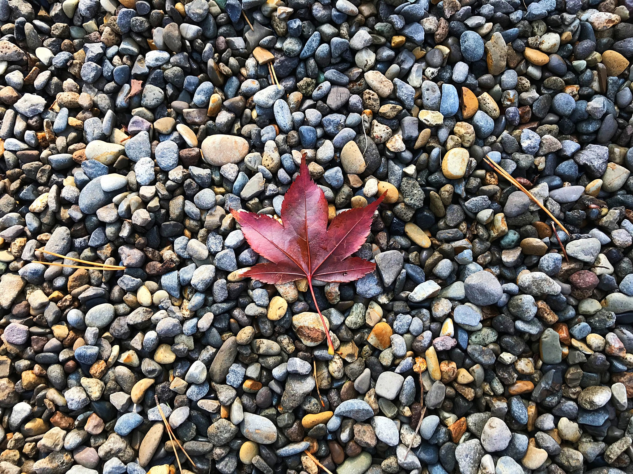 Red autumn leaf and the pebble by SOE AUNG LIN