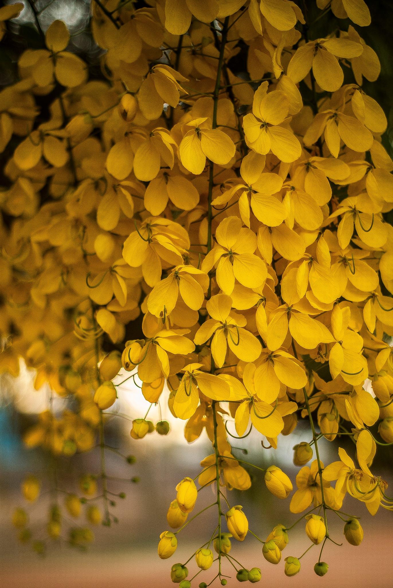 Las flores desconocidas  by JesusAboyte