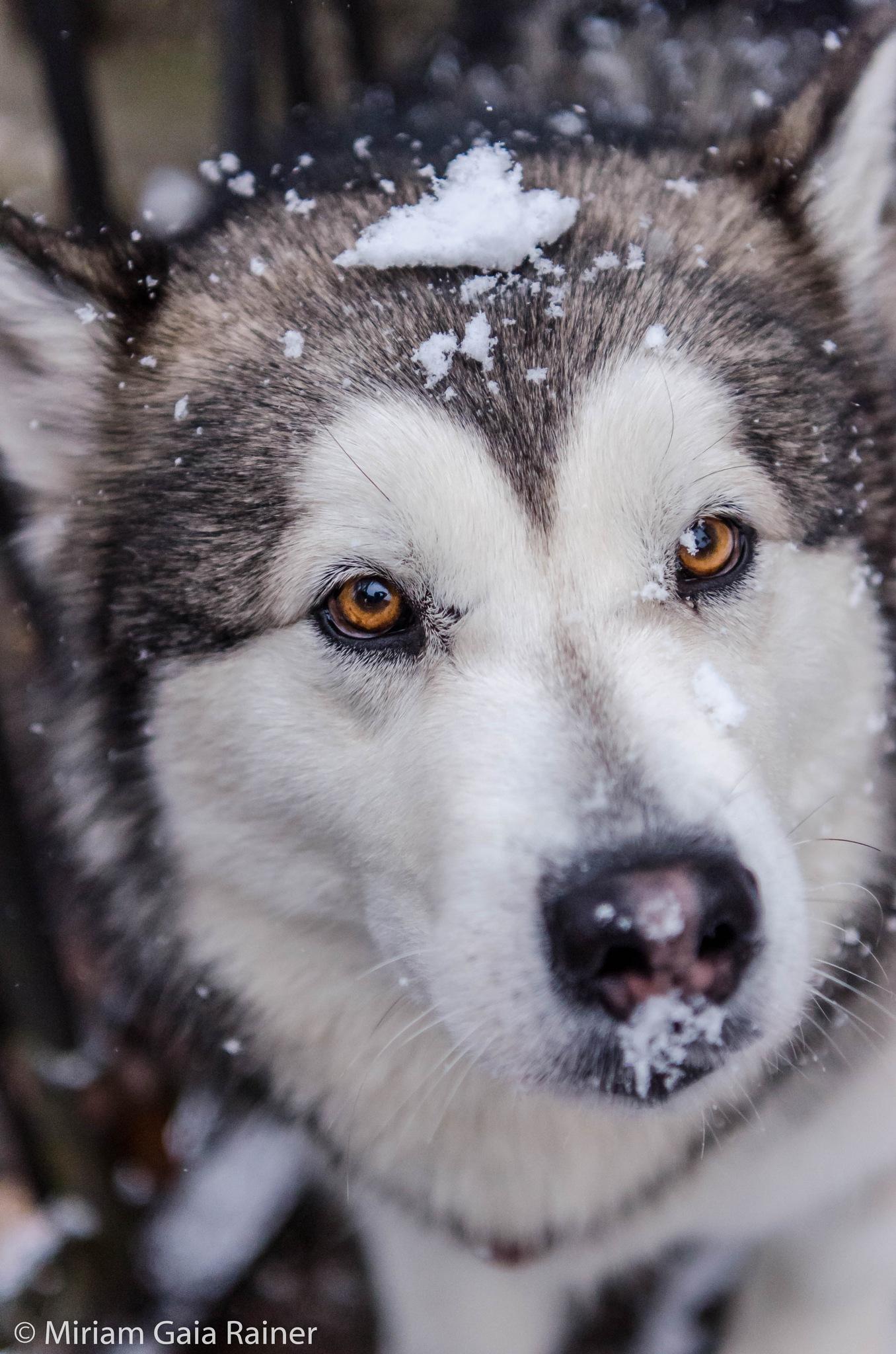 More Snow, Please by Miriam Gaia Rainer