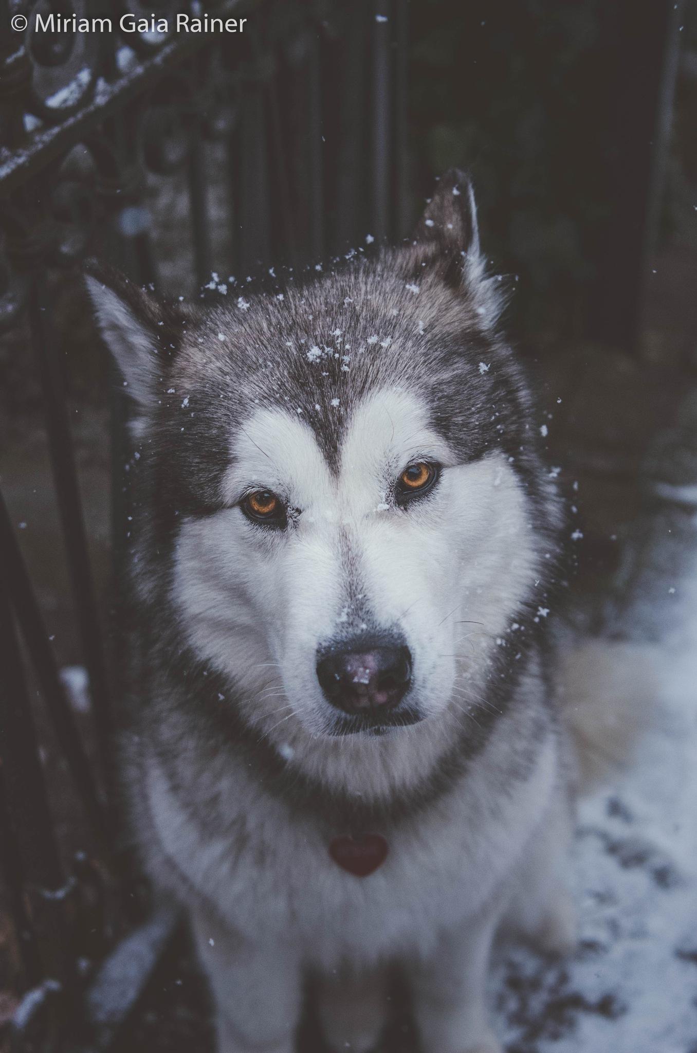 Not Enough Snow by Miriam Gaia Rainer