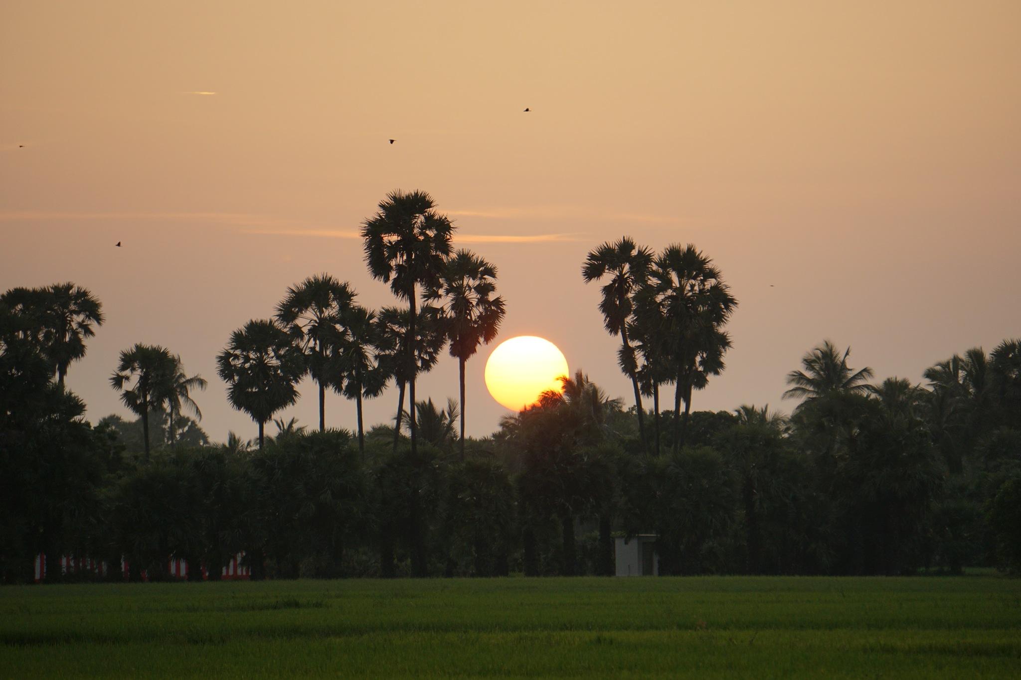 Sunsets by Prageeth Wanigasekara