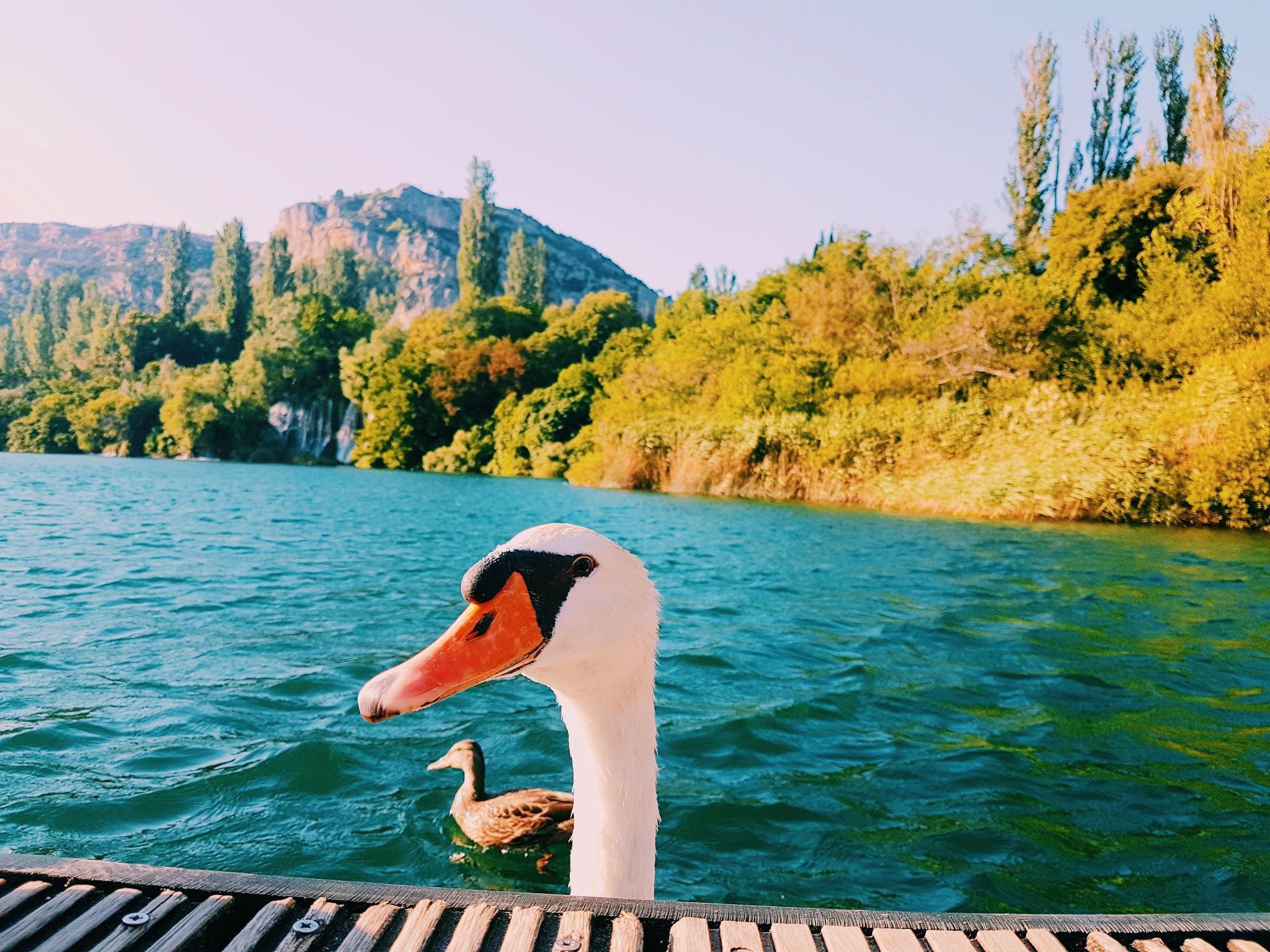 Untitled by Federica_ottone