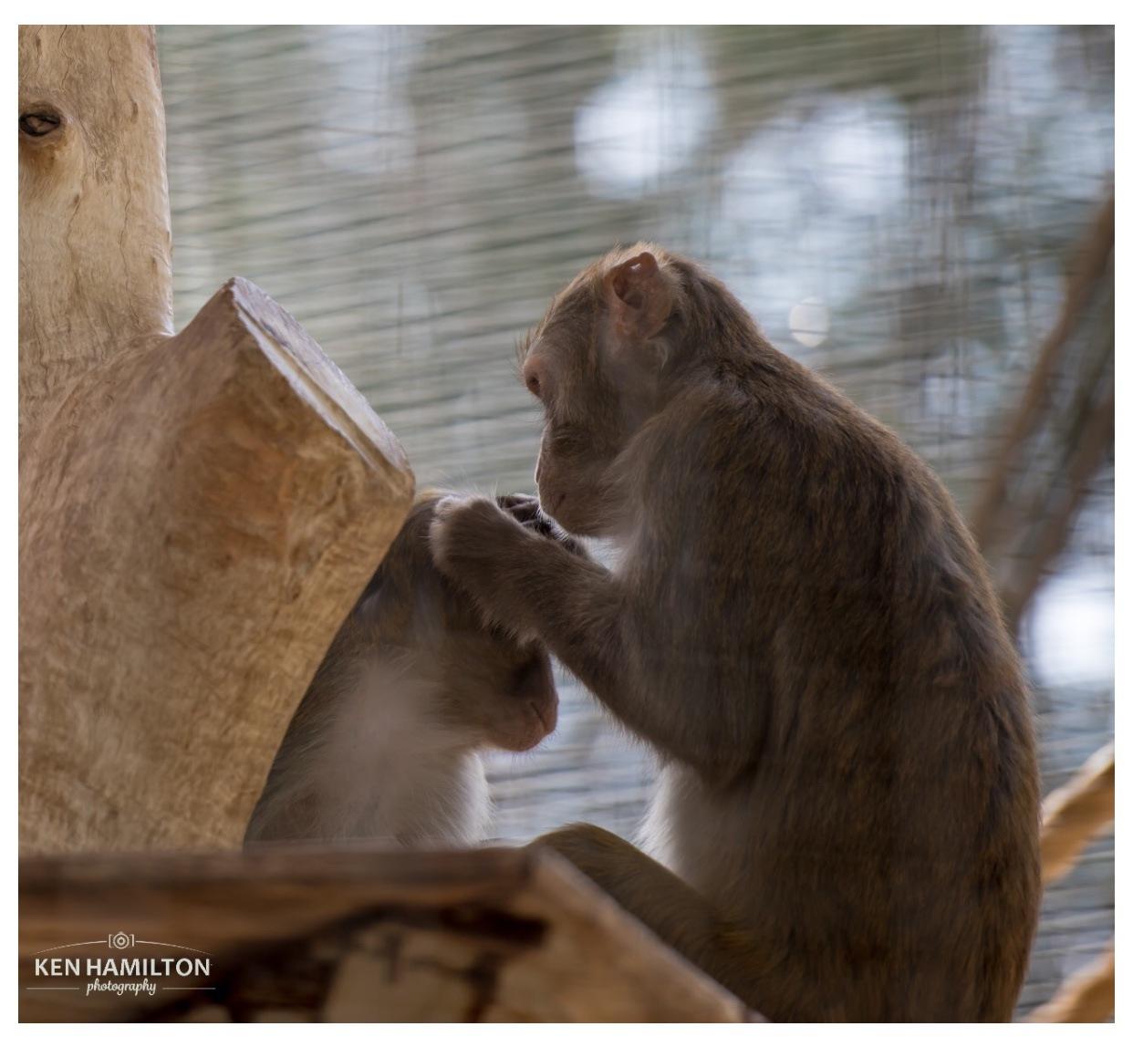 Al Ain Zoo by KenHamilton