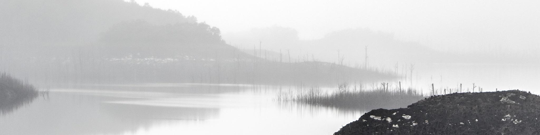 Foggy morning by Anastasia