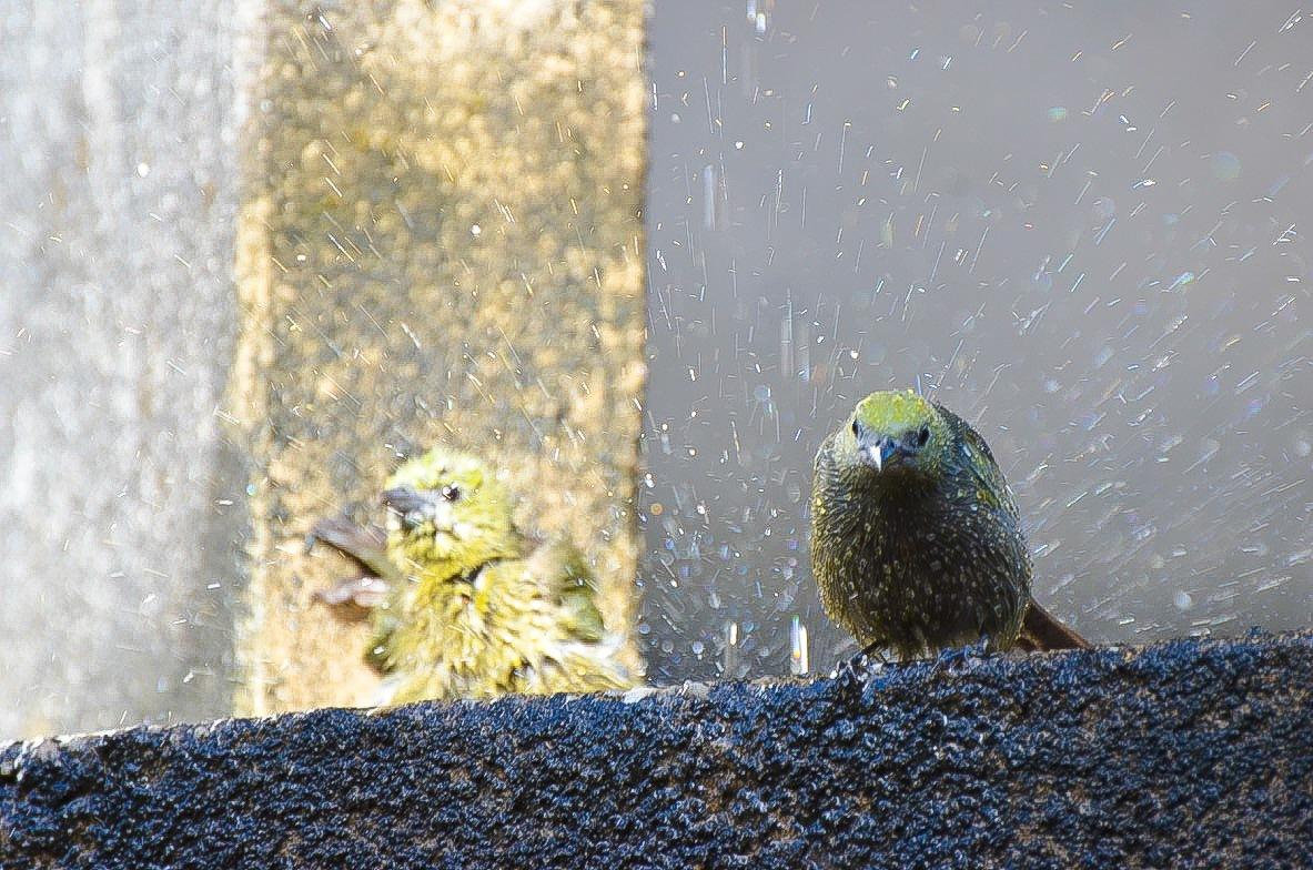 Amazonian birds loves water by Pierina Mariani